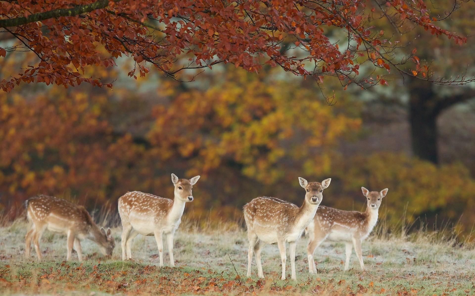 Res: 1920x1200, Deers nature