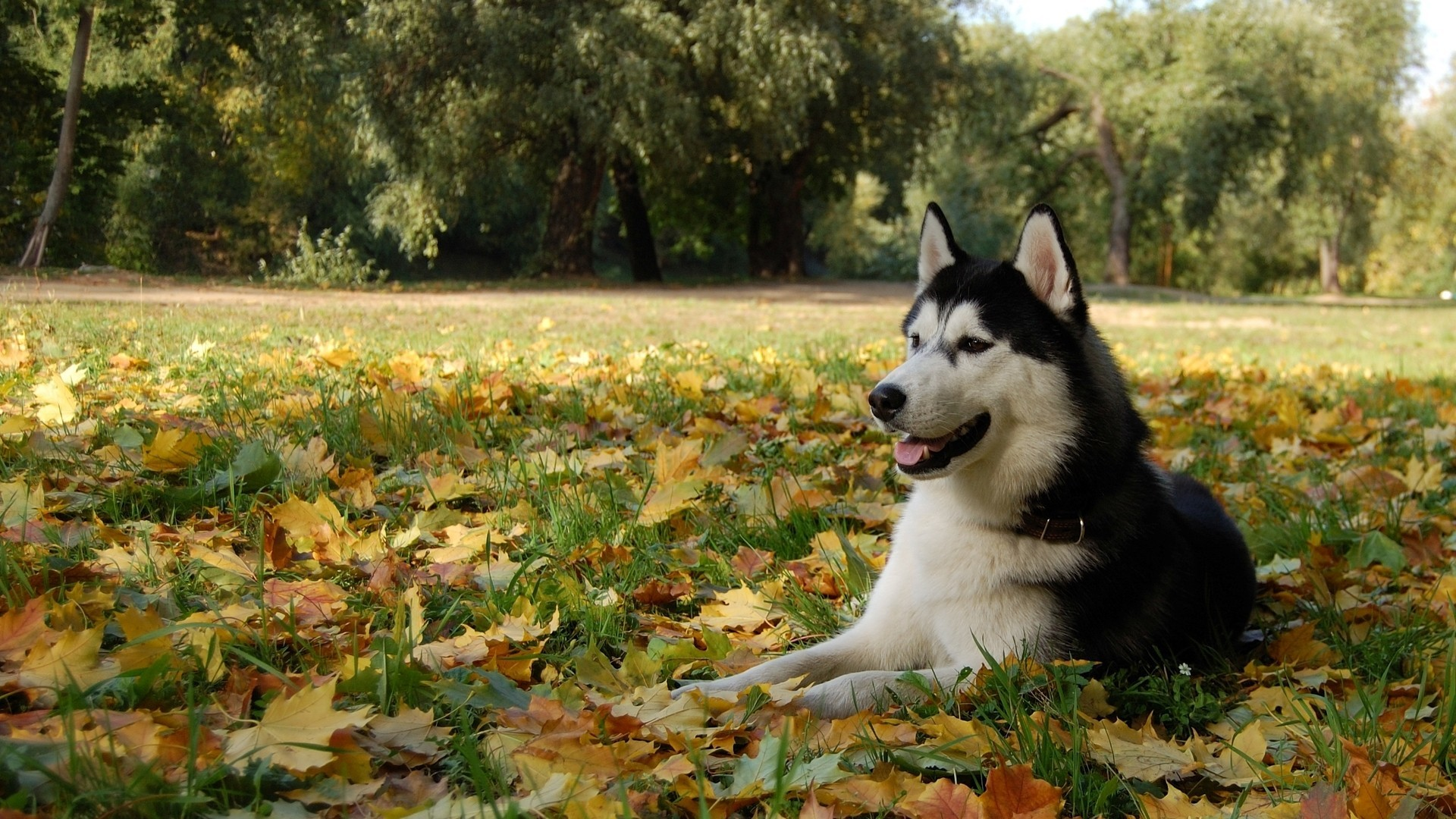 Res: 1920x1080, wallpaper nature · autumn · animals