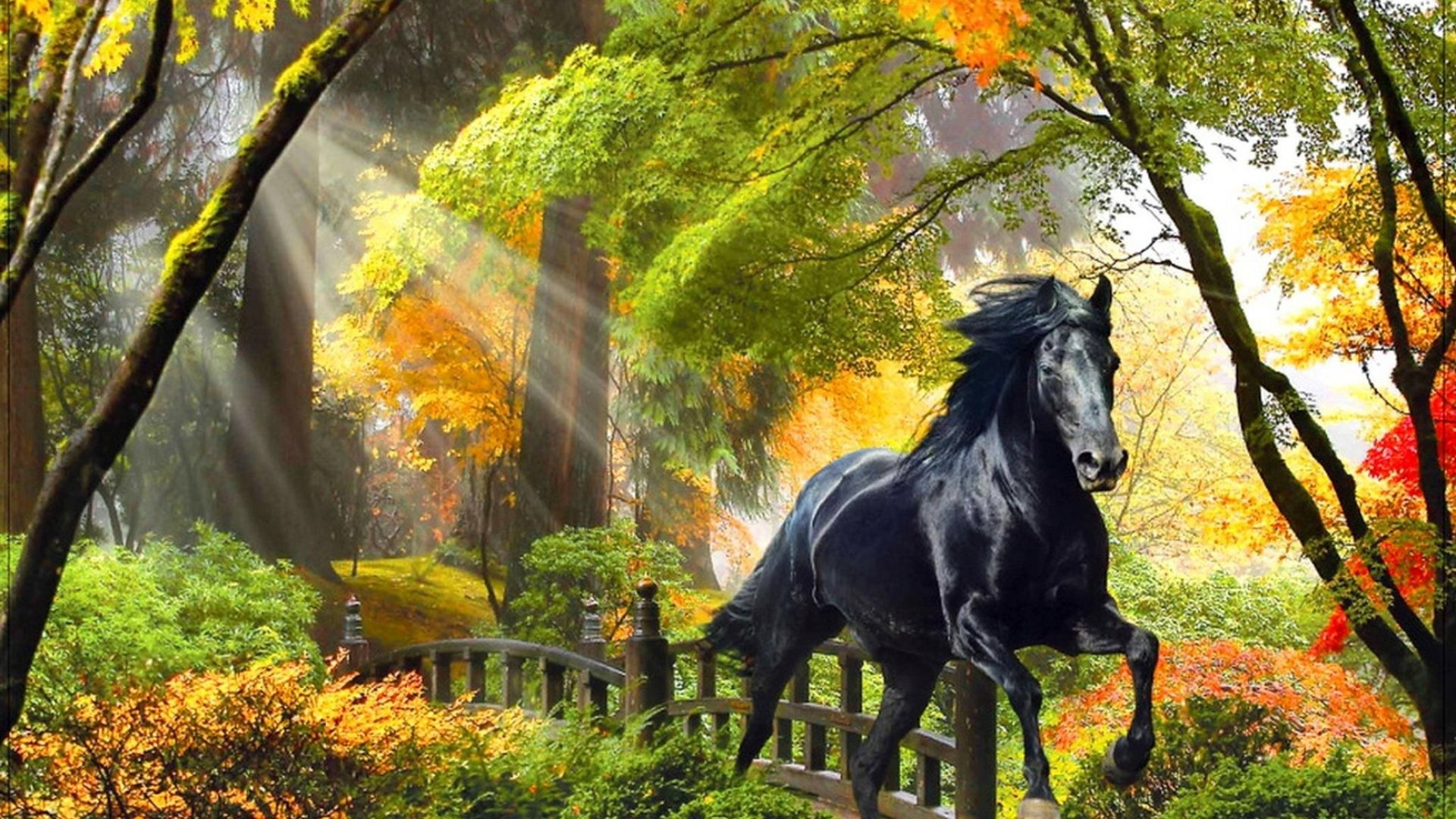 Res: 1920x1080, Fall Horse Awesome Image – 231770566 Fall Horse Photos,  px
