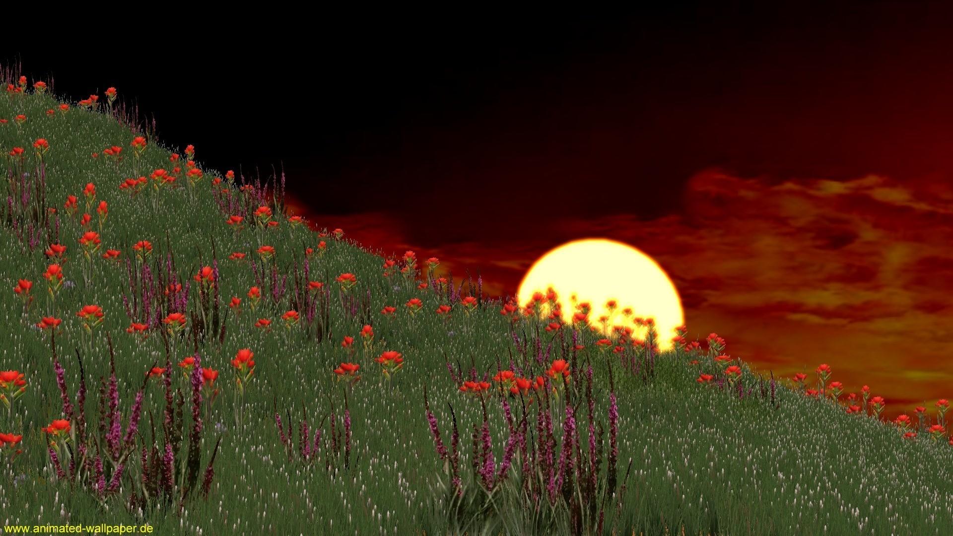 Res: 1920x1080,  Video Hintergründe   Animierte Hintergrundbilder animiert als  animated Video Wallpaper auf www.animated-