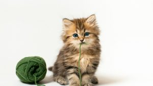 Kitten Images wallpapers
