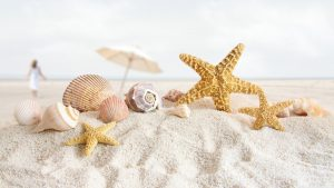 Seashell Desktop wallpapers