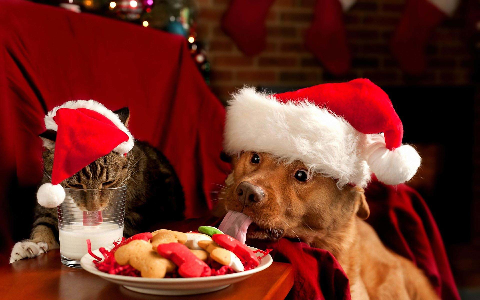 Res: 1920x1200, Funny Christmas Dogs 3 Free Hd Wallpaper