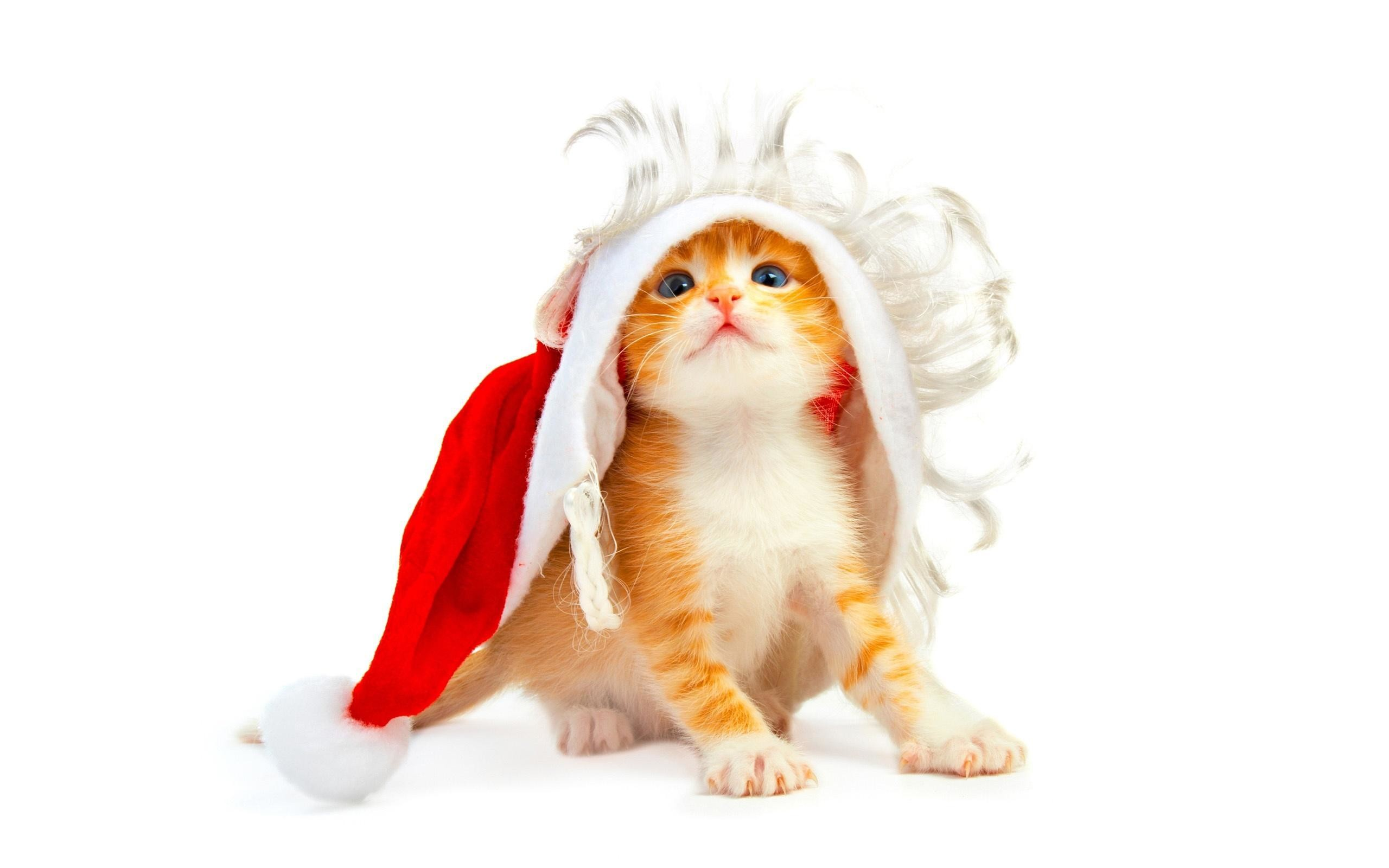 Res: 2560x1600, Funny Christmas Cat