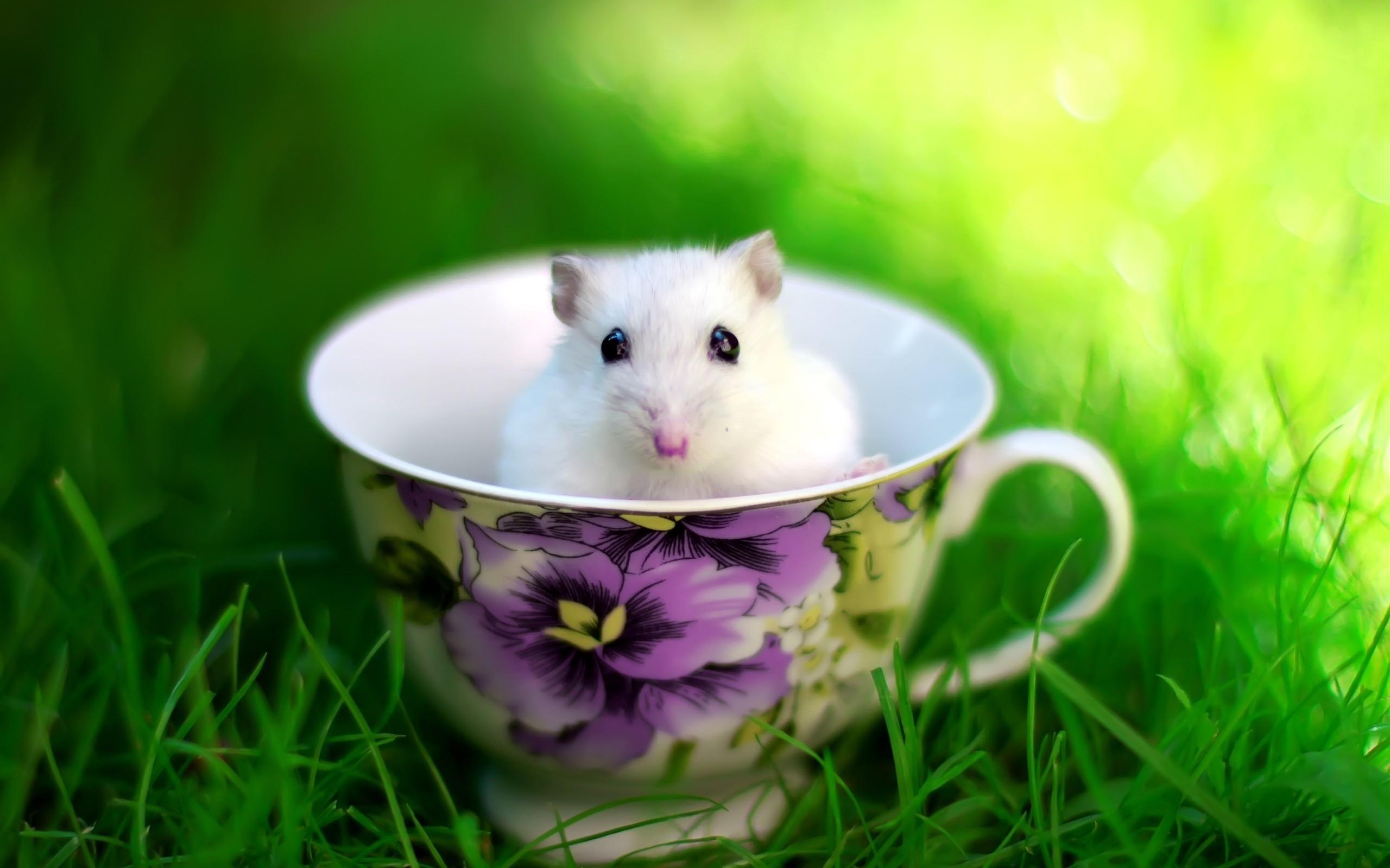 Res: 2560x1600, Hamster Desktop Wallpaper