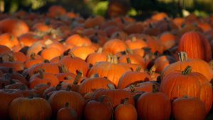 Hd Pumpkin wallpapers
