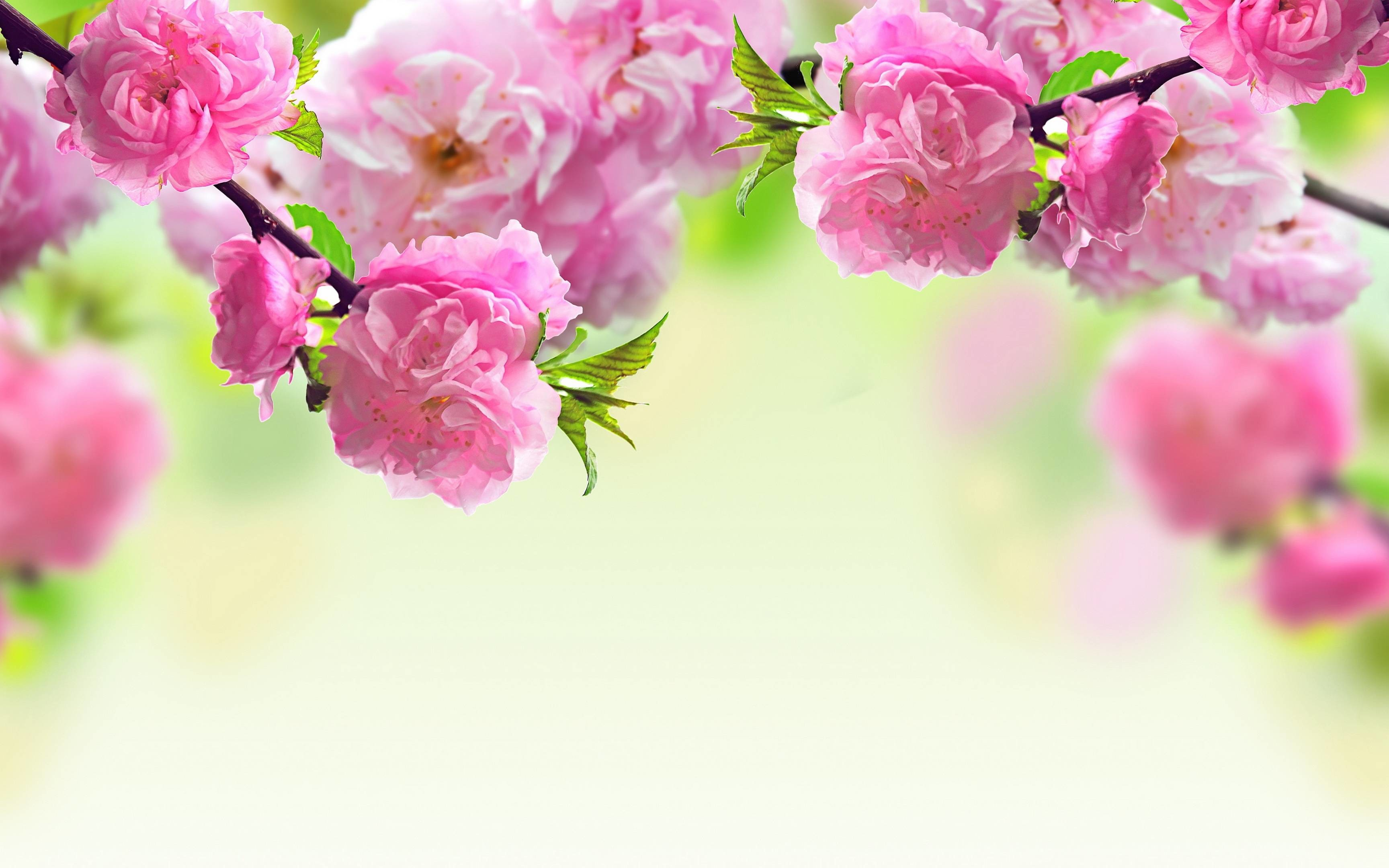Res: 3456x2160,  Spring flowers background Wallpapers | Pictures