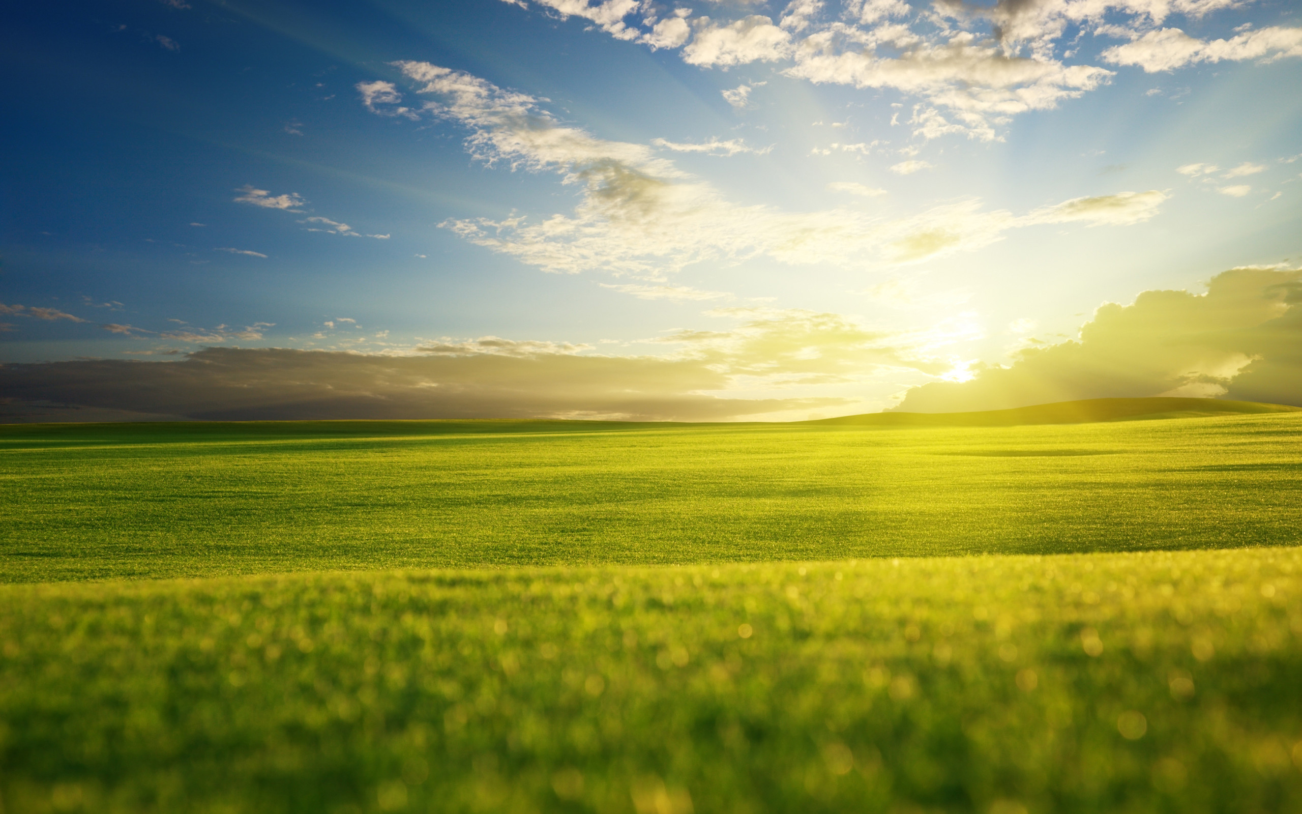Res: 2560x1600, Sunny morning on a spring field wallpapers and images wallpapers