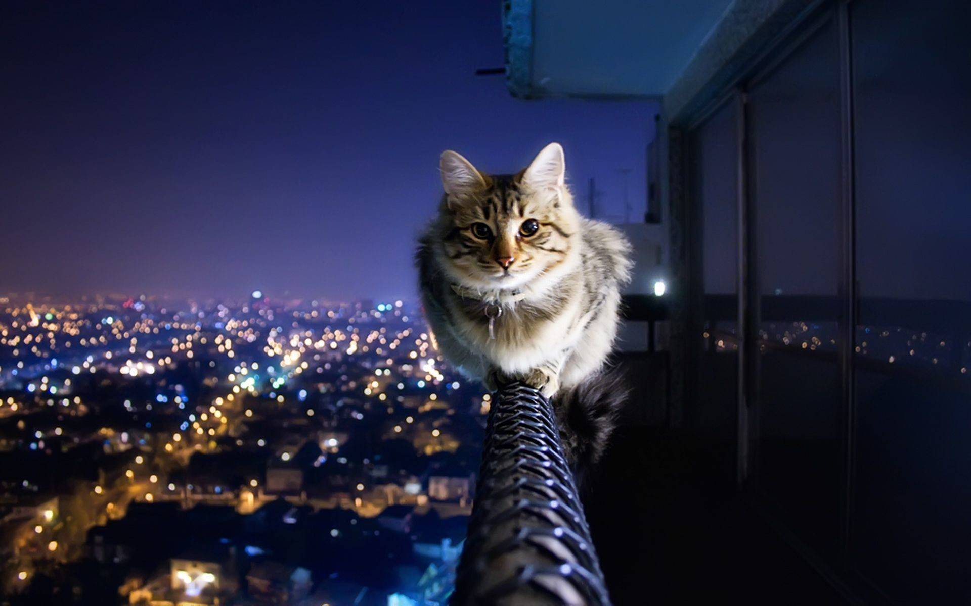 Res: 1920x1200, Best HD Wallpapers Collection of Cat HD - , 04.22.14 for PC & Mac,  Tablet, Laptop, Mobile