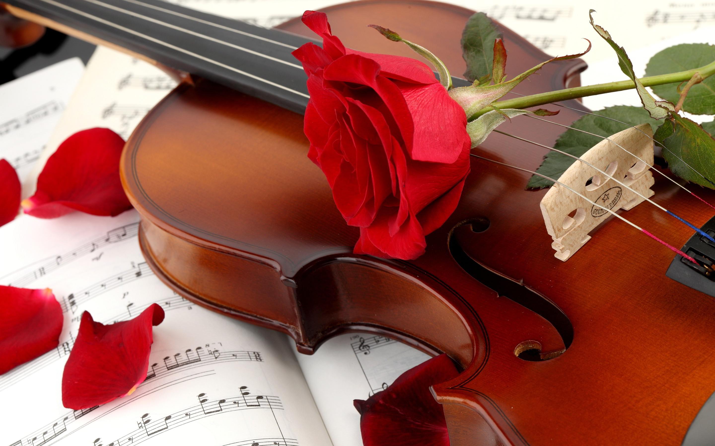 Res: 2880x1800, Music violin red rose