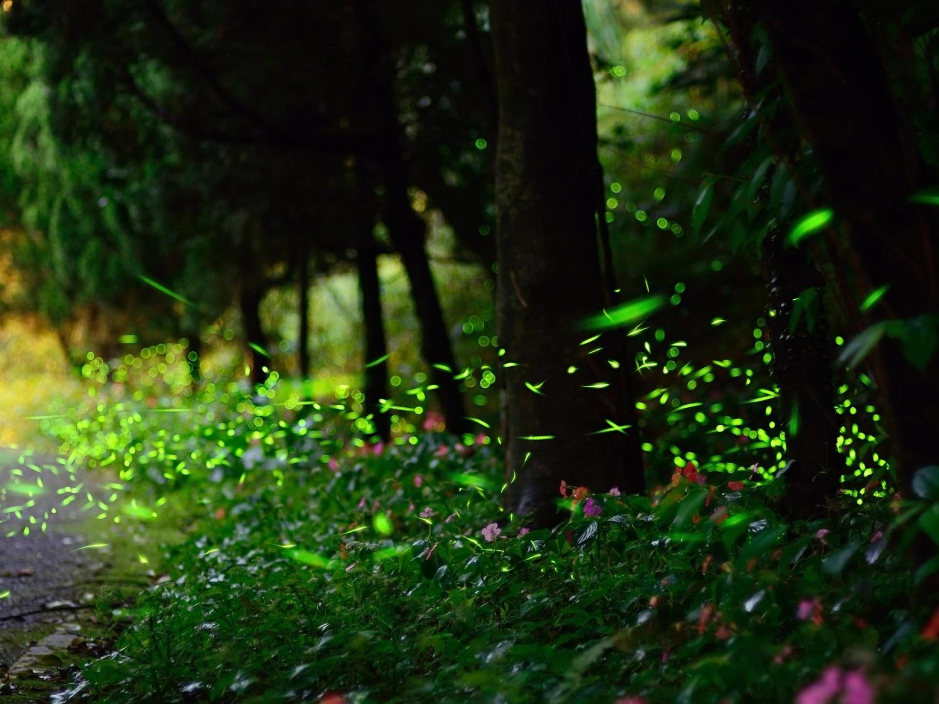 Res: 1920x1440, Firefly roads nature landscapes trees forest woods glow wallpaper |   | 35298 | WallpaperUP