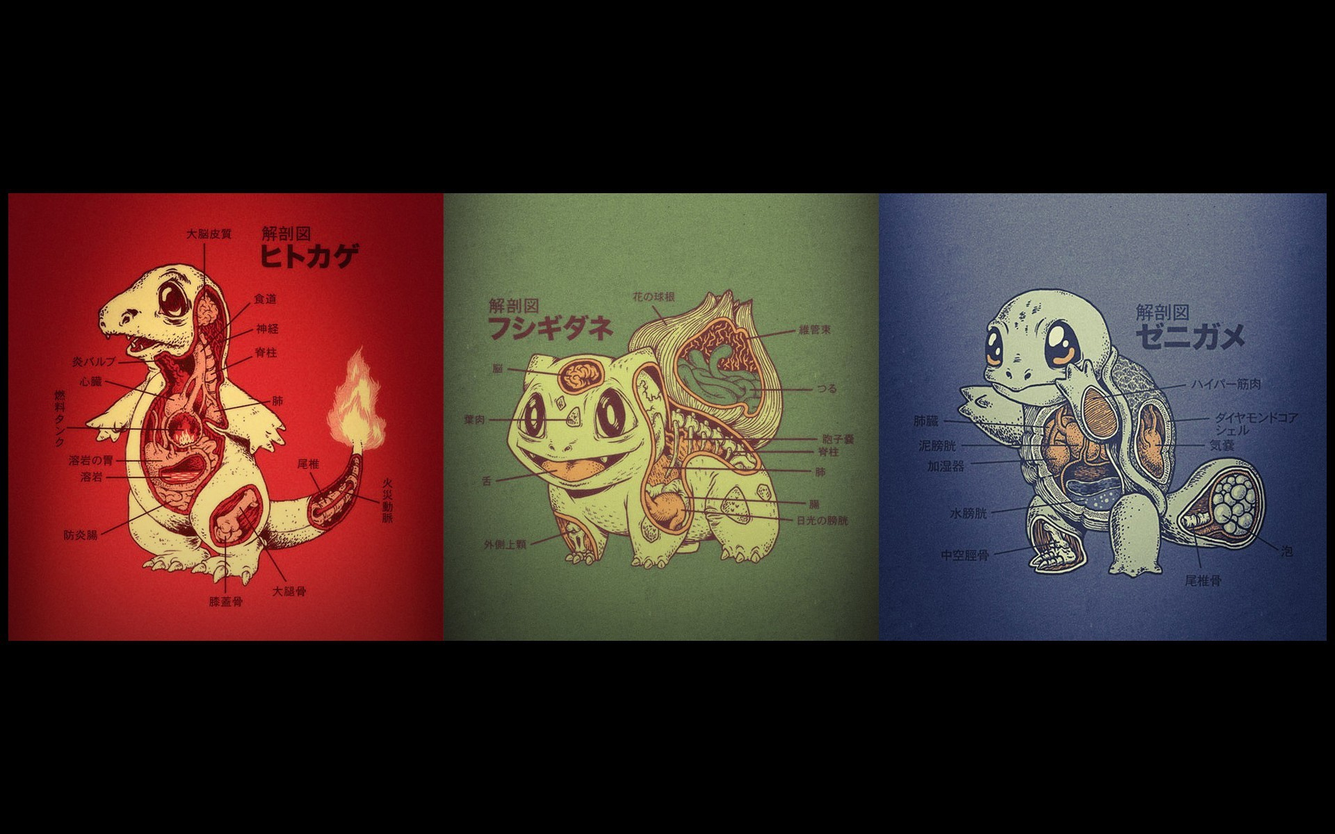 Res: 1920x1200, Squirtle, Bulbasaur, Charmander, anatomy