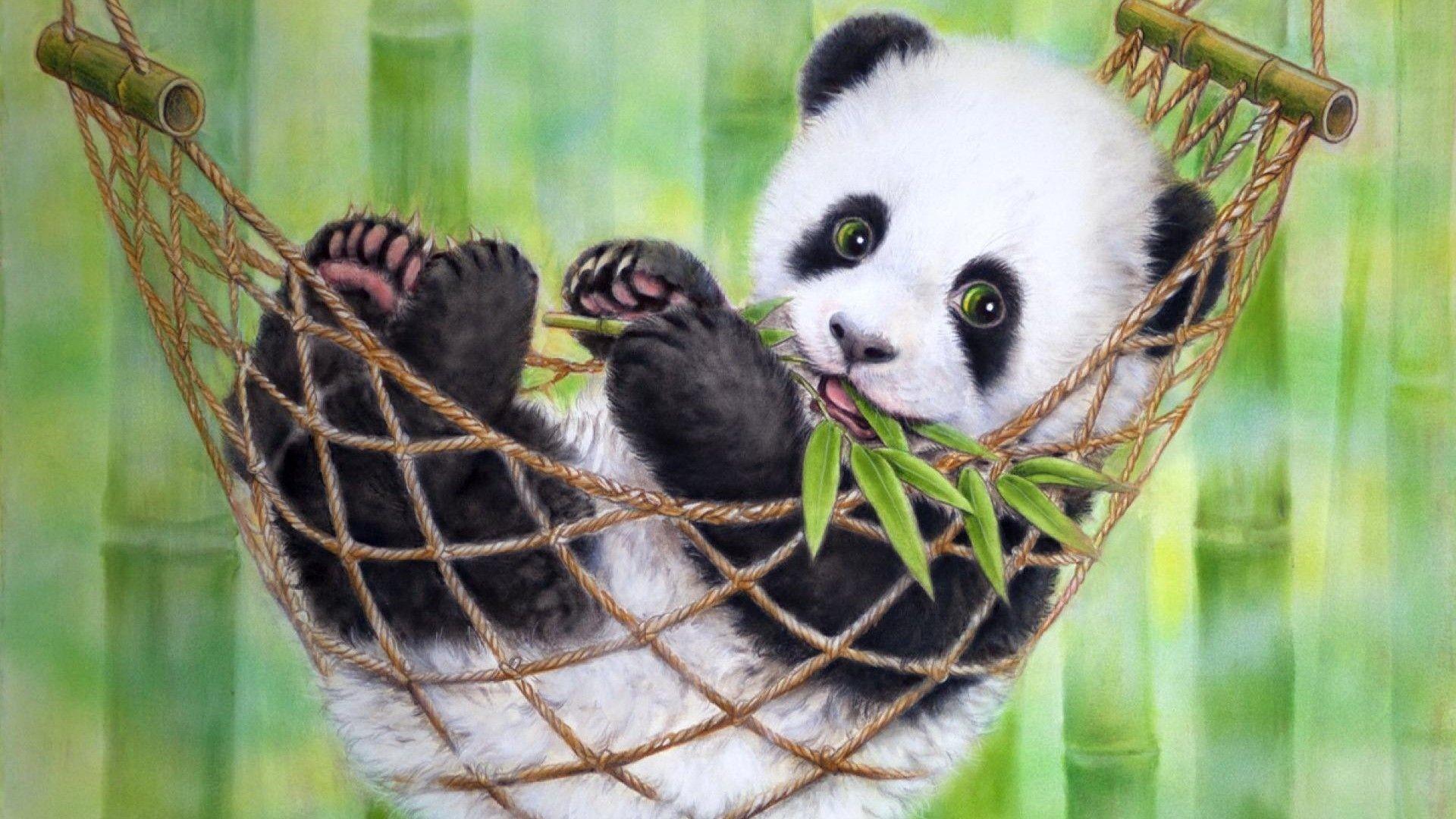 Res: 1920x1080, Simeon Panda HD desktop wallpaper : High Definition 1920×1080 Panda Pics  Wallpapers (38 Wallpapers)   Adorable Wallpapers