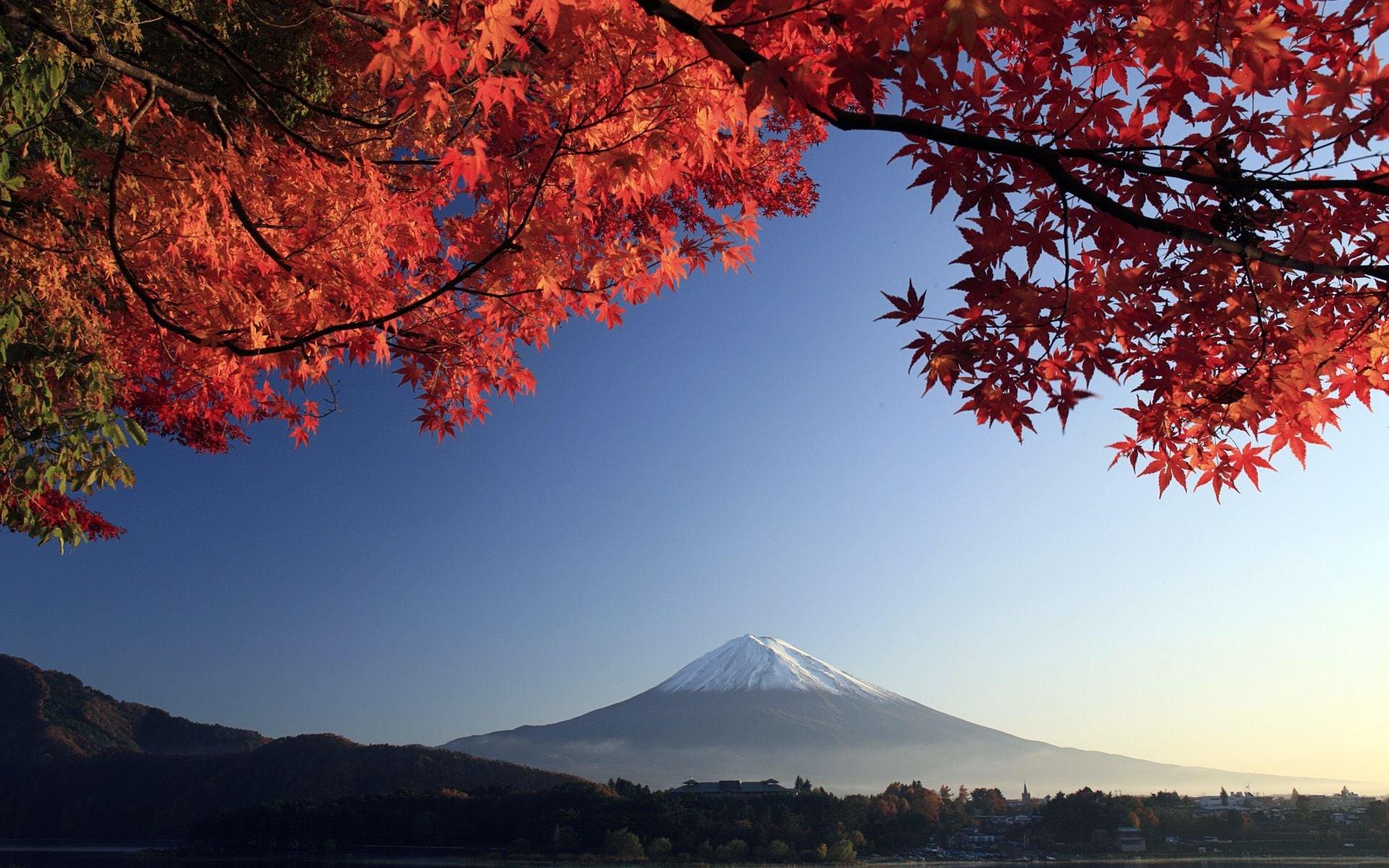 Res: 1920x1200, Autumn mount Fuji wallpaper
