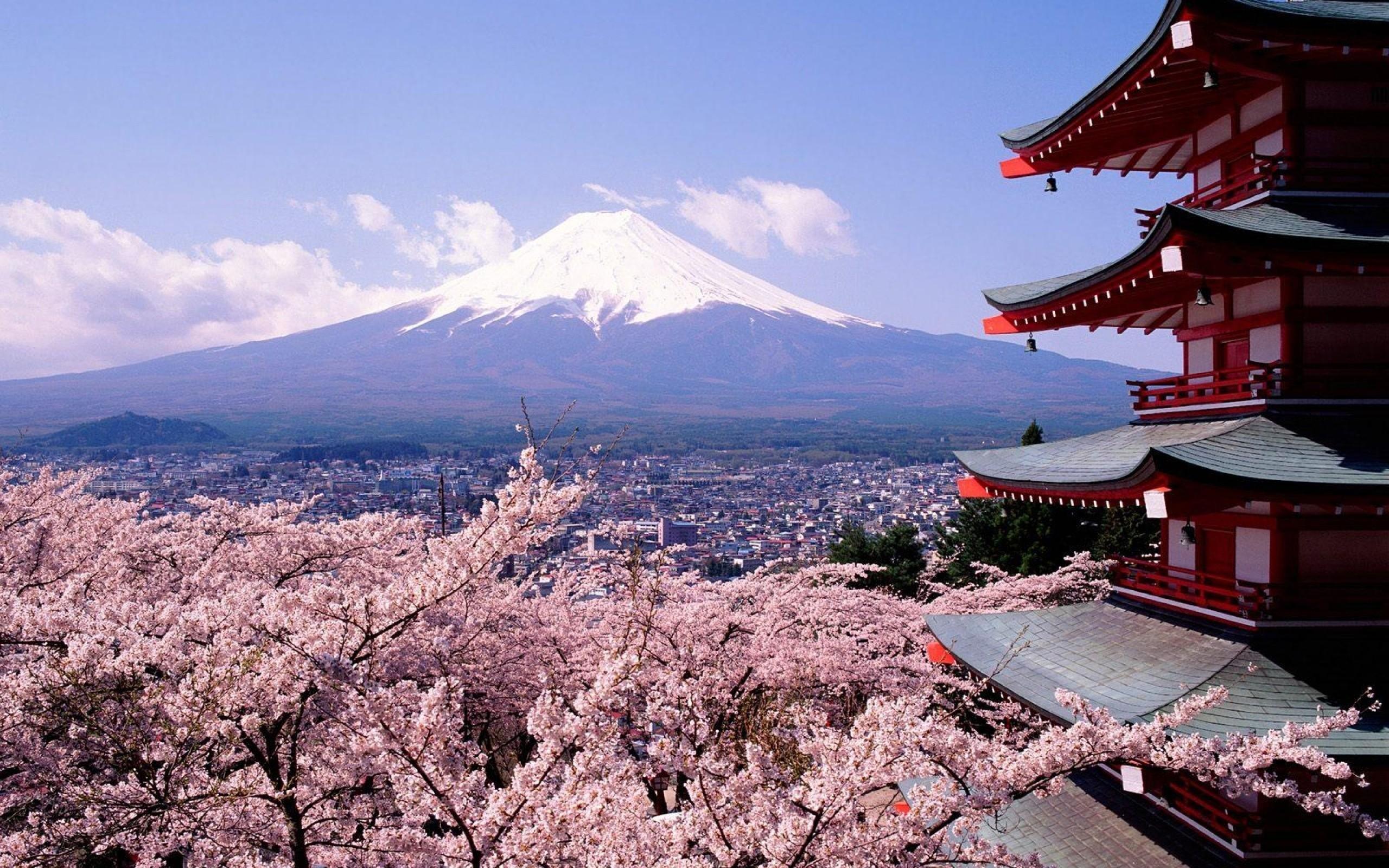 Res: 2560x1600, tokyo-fuji-mountain-and-sakura-flower-hd-wallpaper-desktop