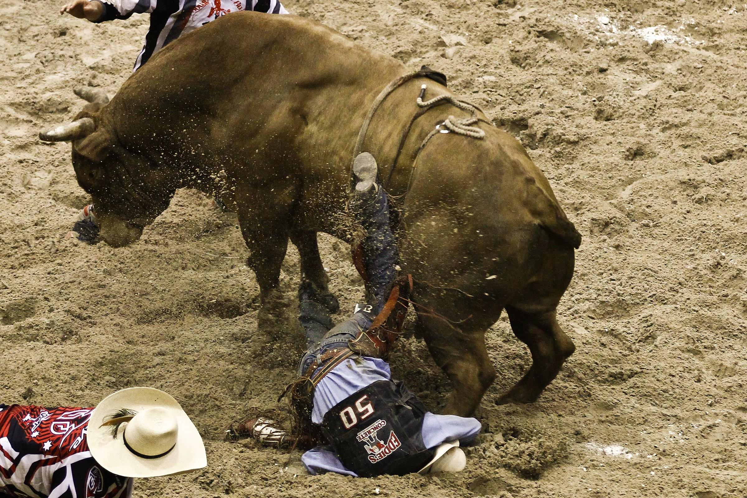 Res: 2400x1600, Bull riding bullrider rodeo western cowboy extreme cow (20)_JPG wallpaper |   | 298690 | WallpaperUP