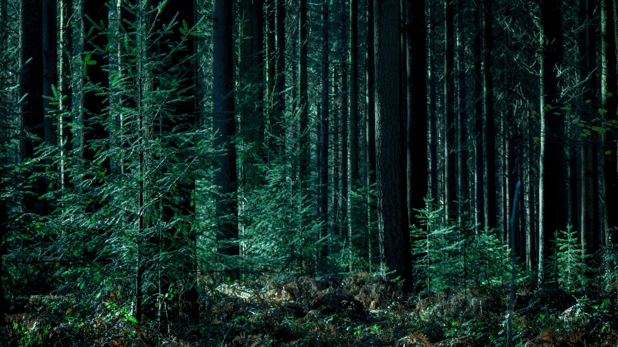 Res: 2560x1440,  Wallpaper trees, forest, trunks, green