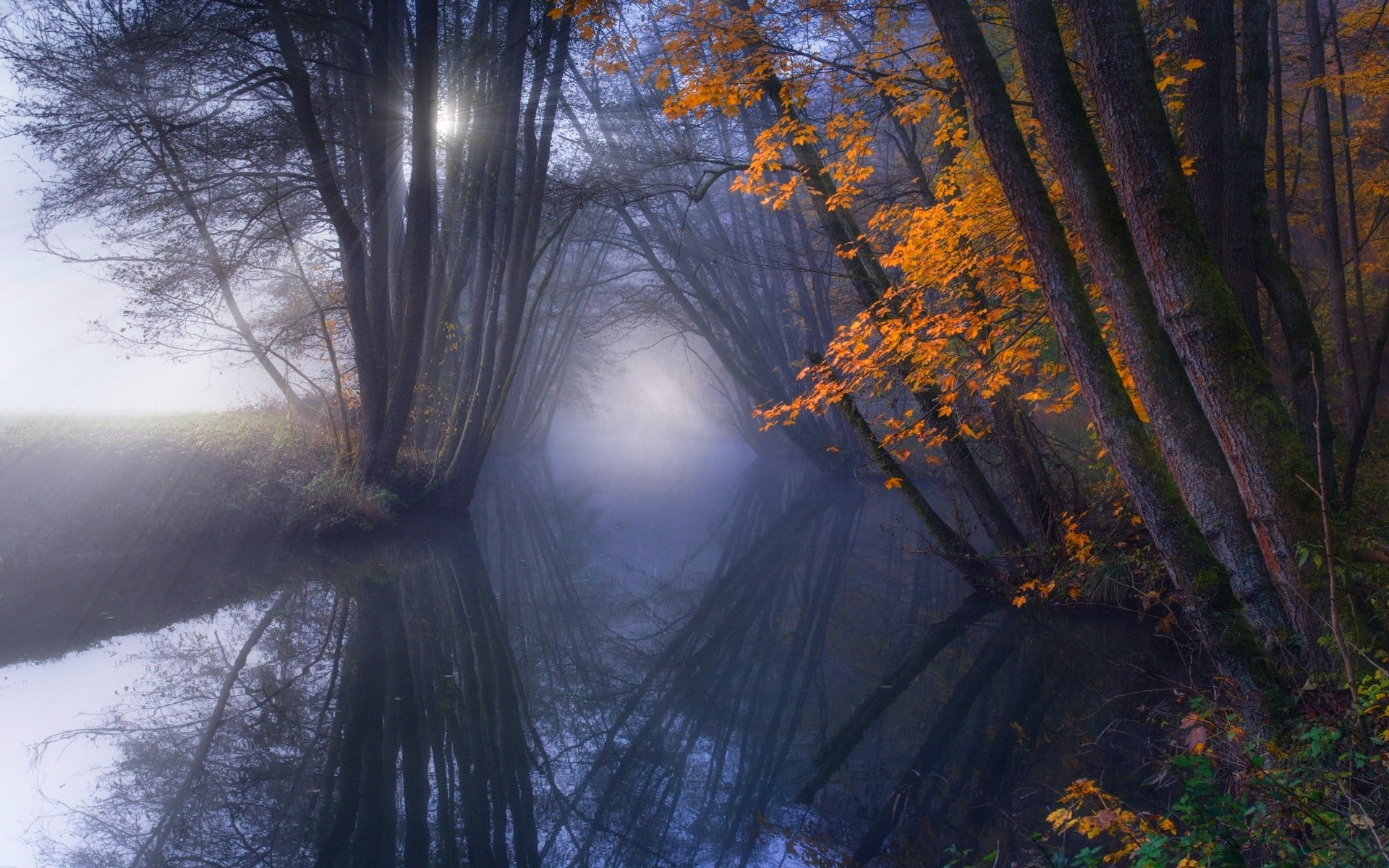 Res: 1920x1200, ray of light reflecting from sun through forest HD wallpaper