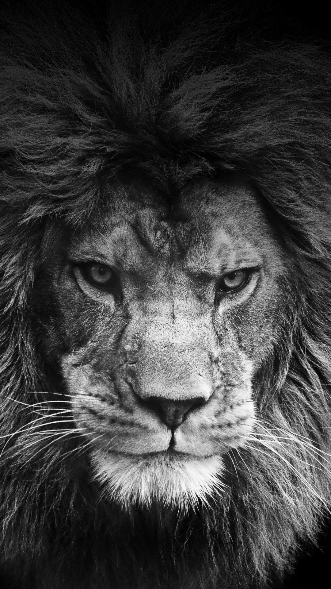 Res: 1080x1920, Find out: Legendary Lion wallpaper on http://hdpicorner.com/legendary-lion/