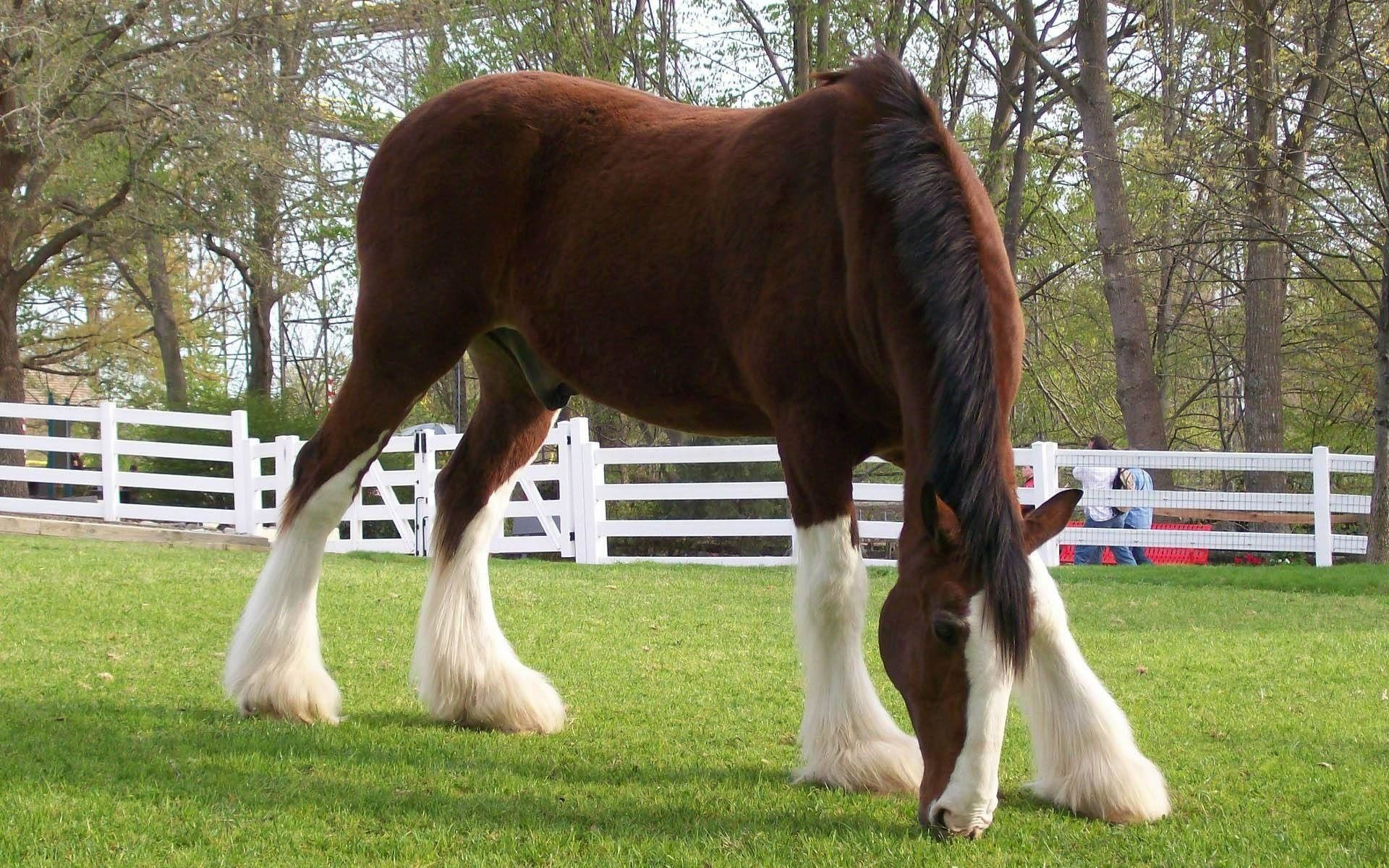 Res: 1920x1200, Breyer clydesdale Horse wallpaper - 651180