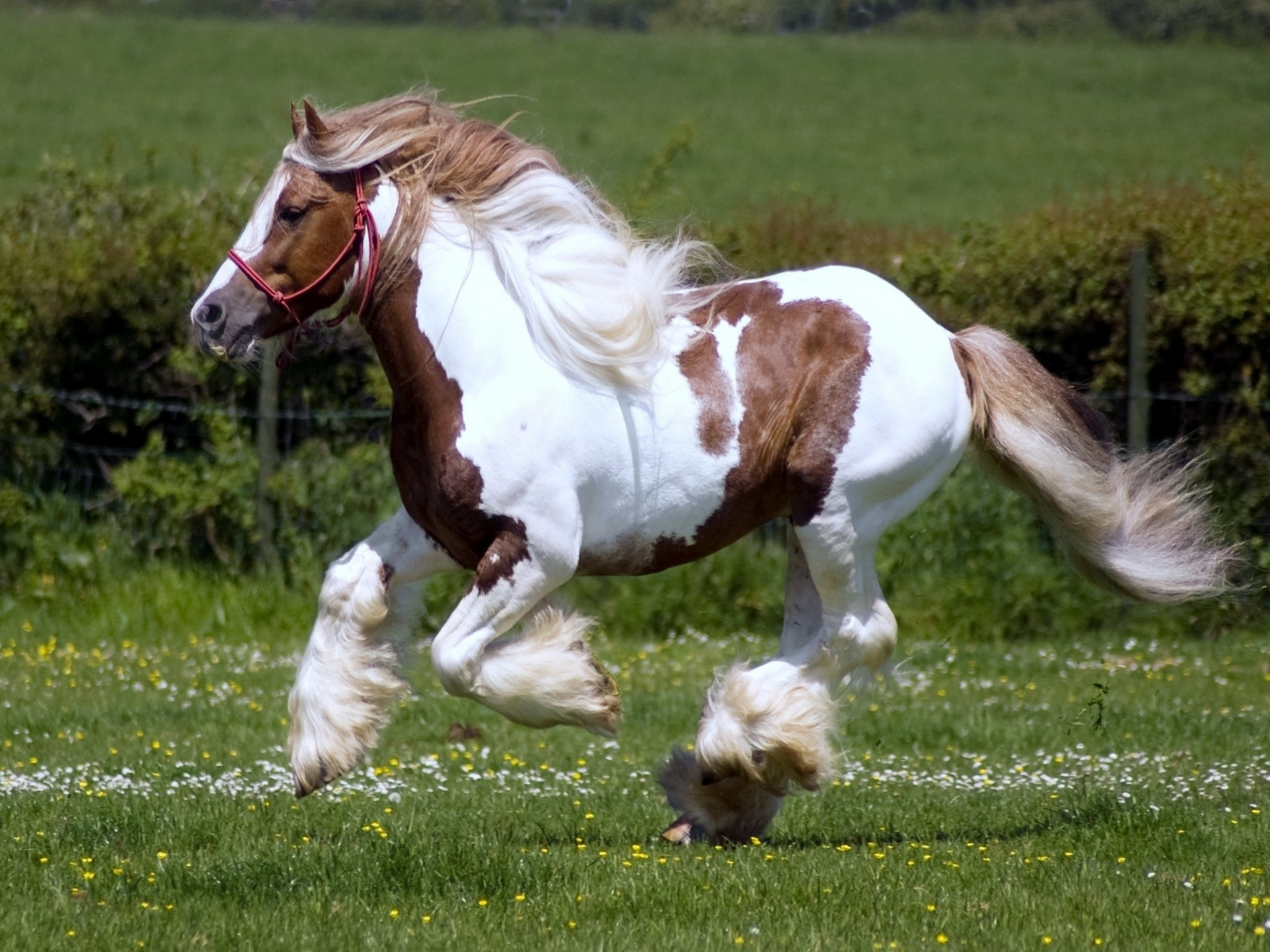 Res: 2048x1536, Clydesdale Horse Best Wallpaper 19916