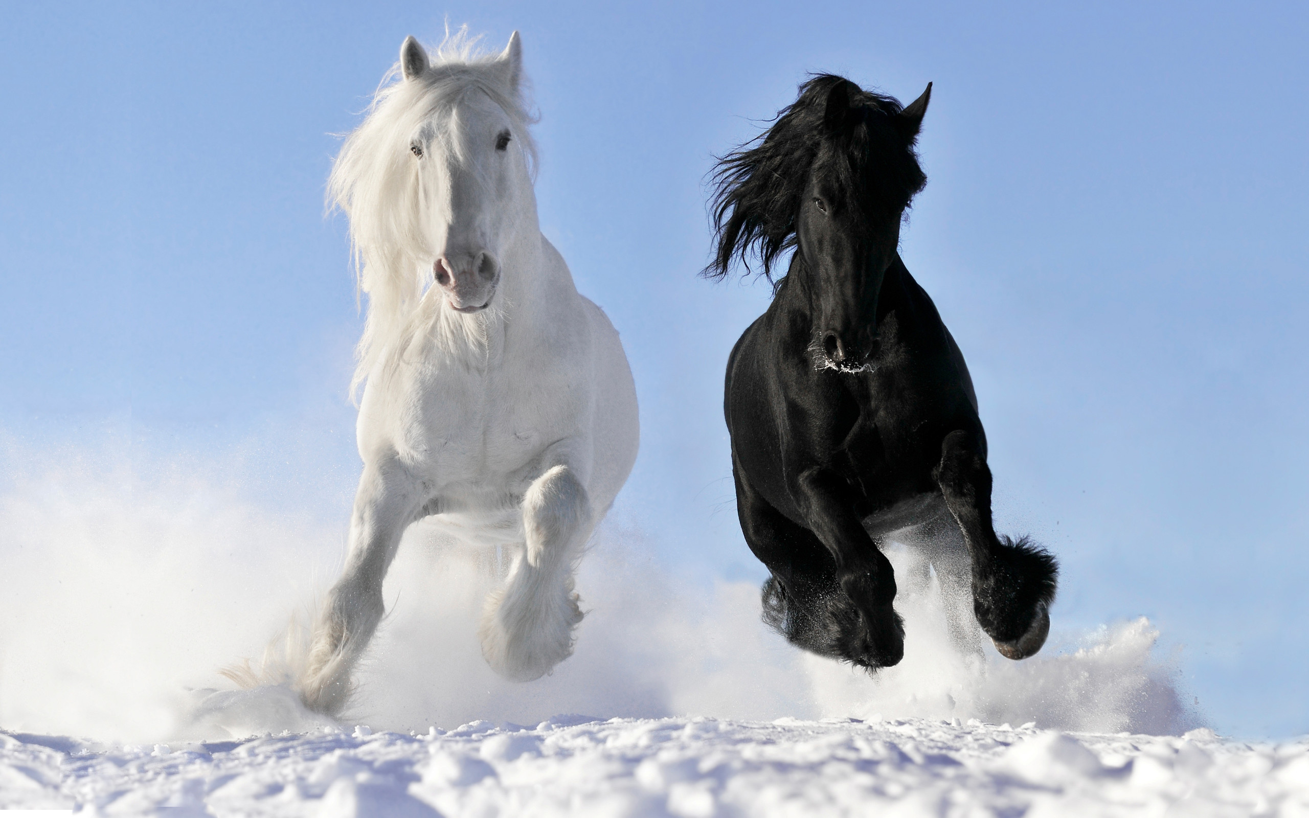 Res: 2560x1600, Animal - Horse Wallpaper