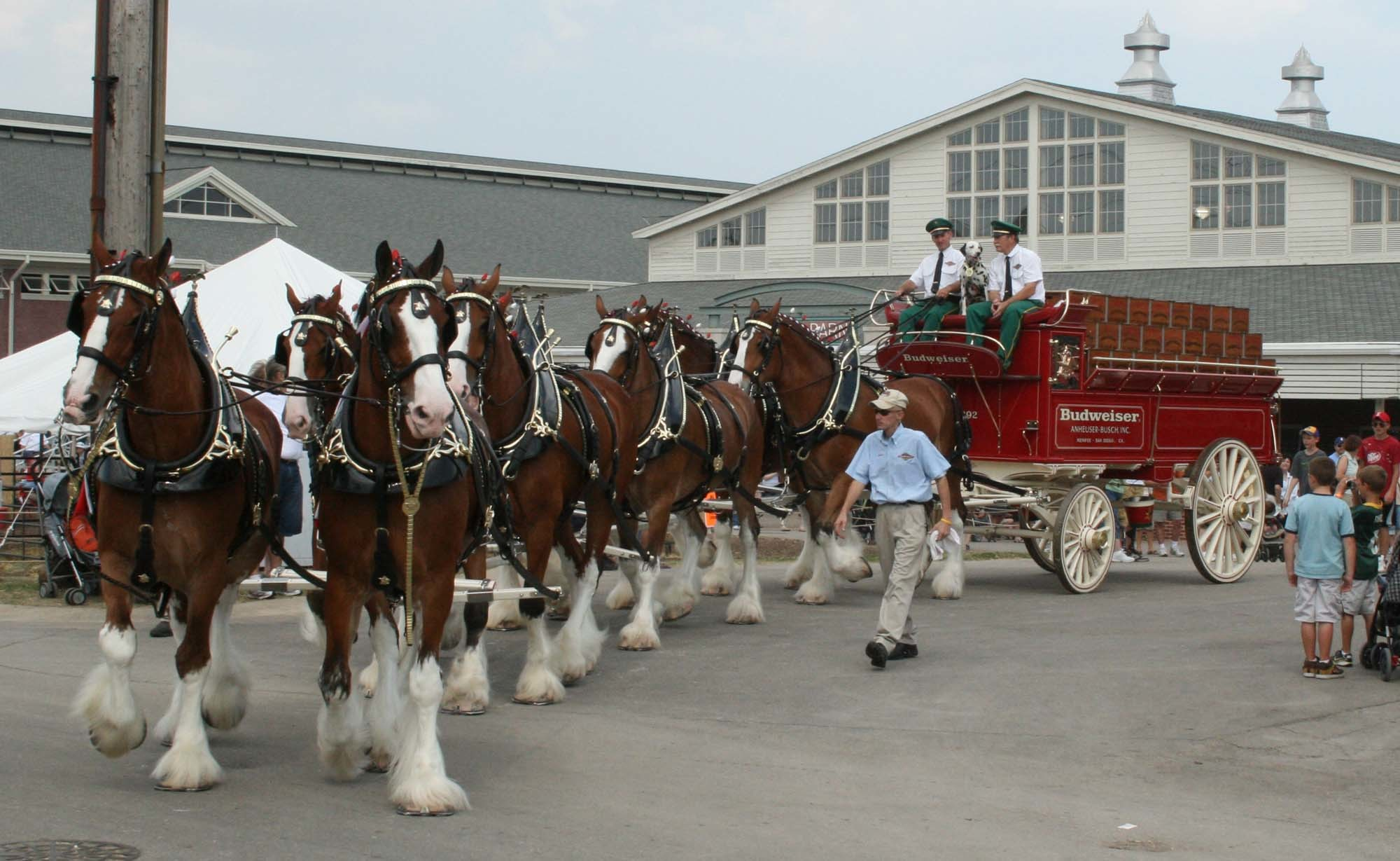 Res: 2000x1229, Budweiser Clydesdale Horses