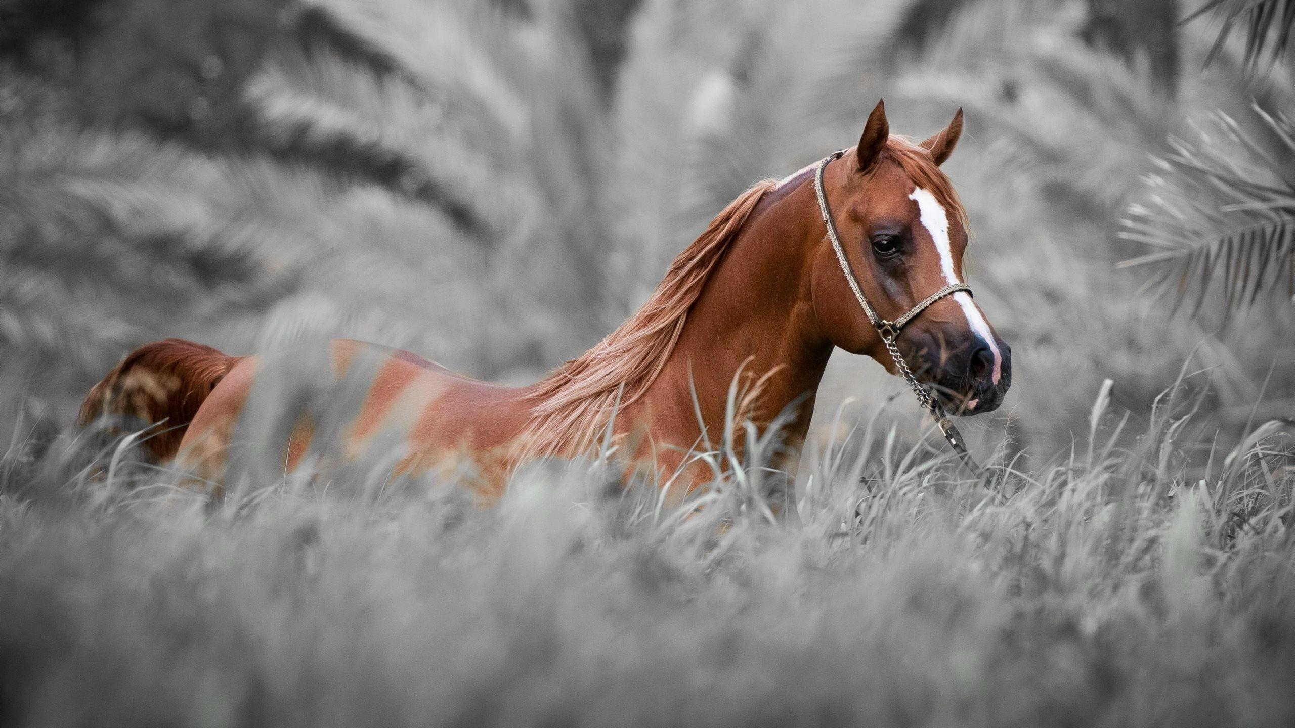 Res: 2560x1440, horse wallpaper hd | horse wallpapers hd