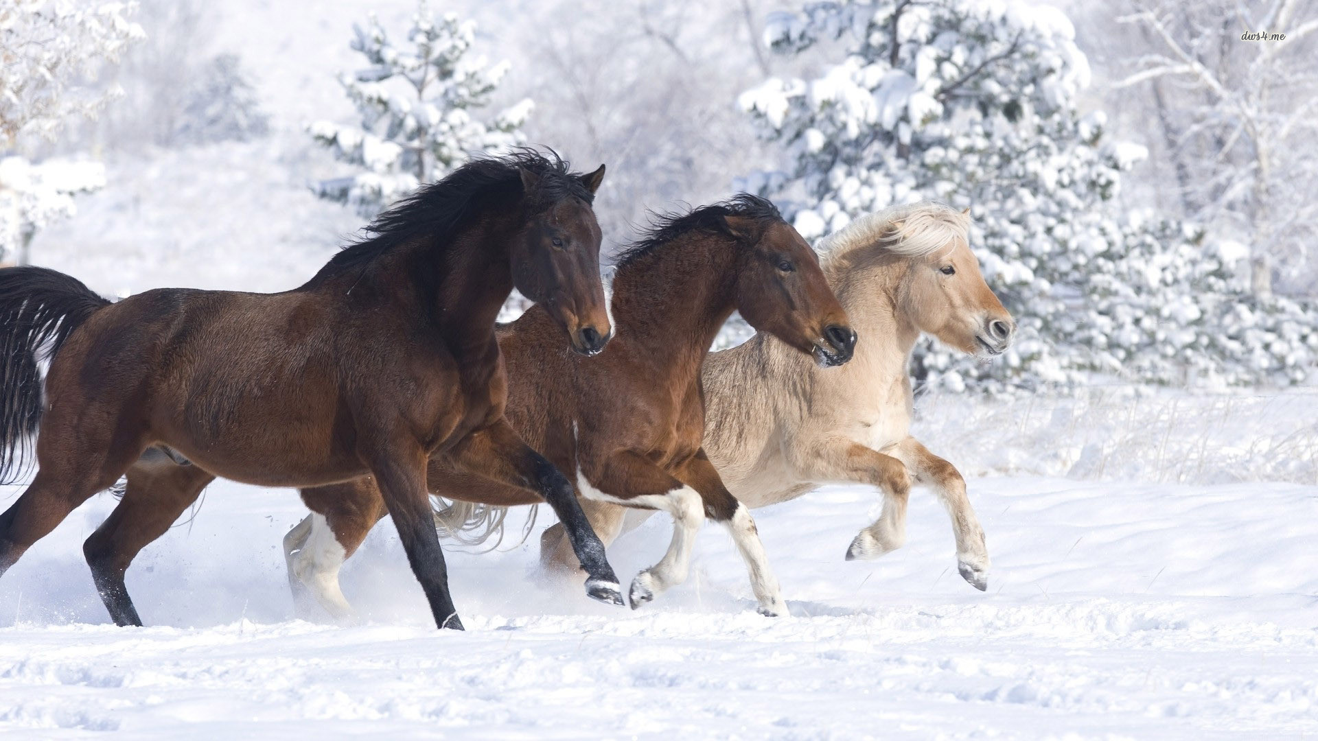 Res: 1920x1080, ... Horses running in the snow wallpaper  ...