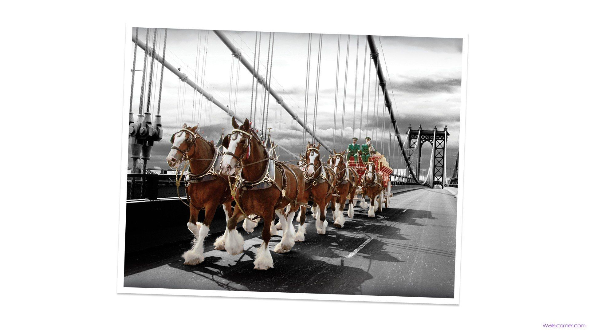 Res: 1920x1080, Budweiser Clydesdales Christmas Wallpaper | ... hd beauty budweiser  clydesdales six horse 95 hd