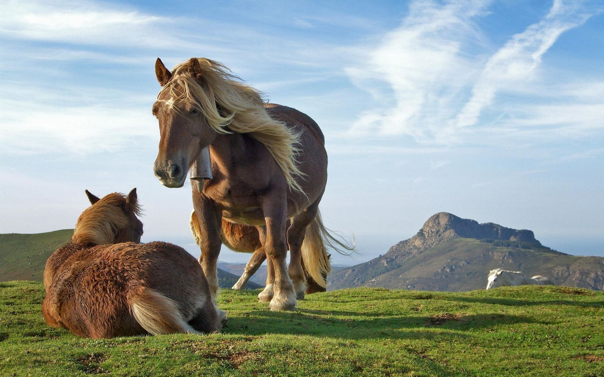 Res: 1920x1200, Horses In The Wild