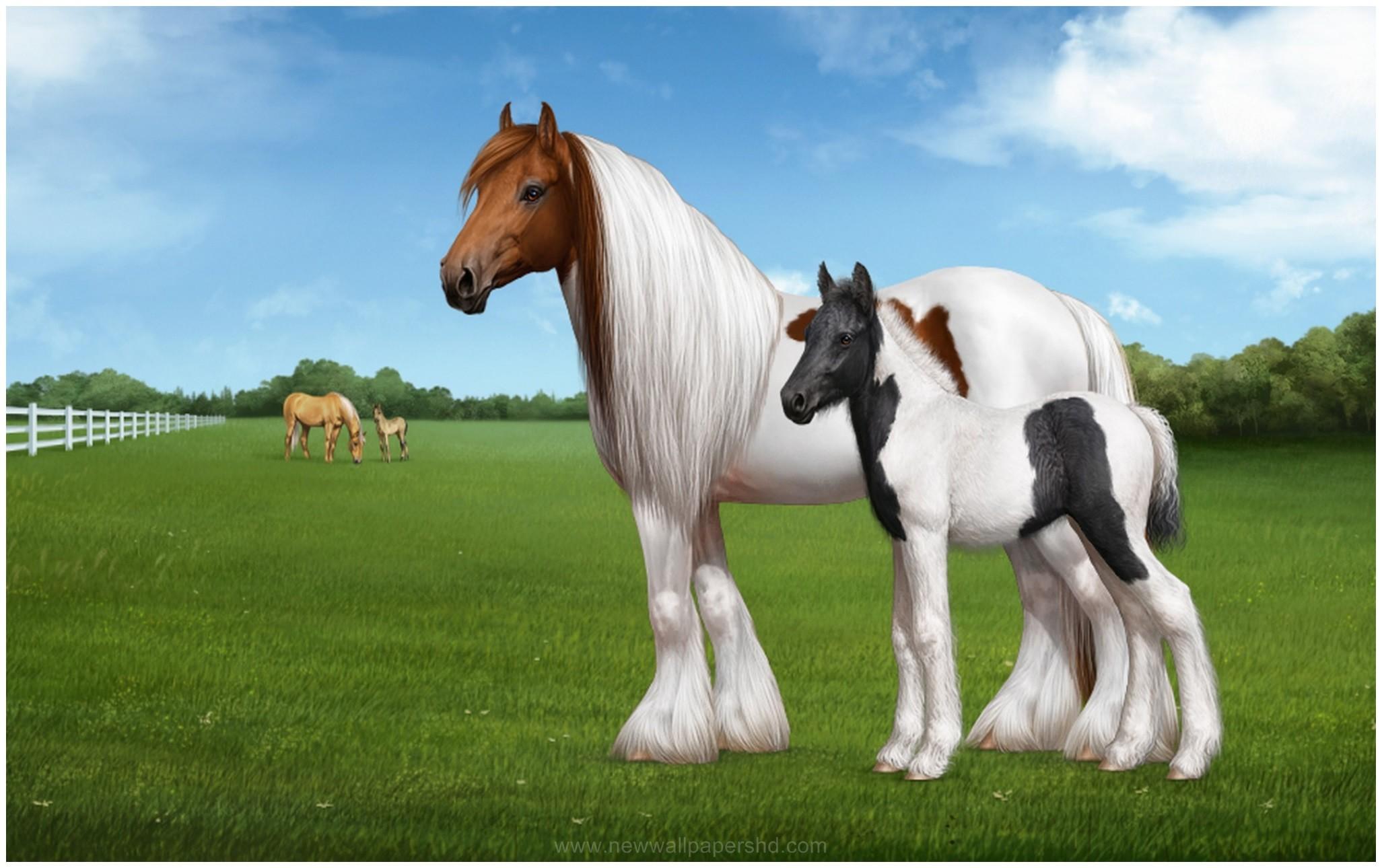 Res: 2053x1290, GYPSY HORSE HD WALLPAPER