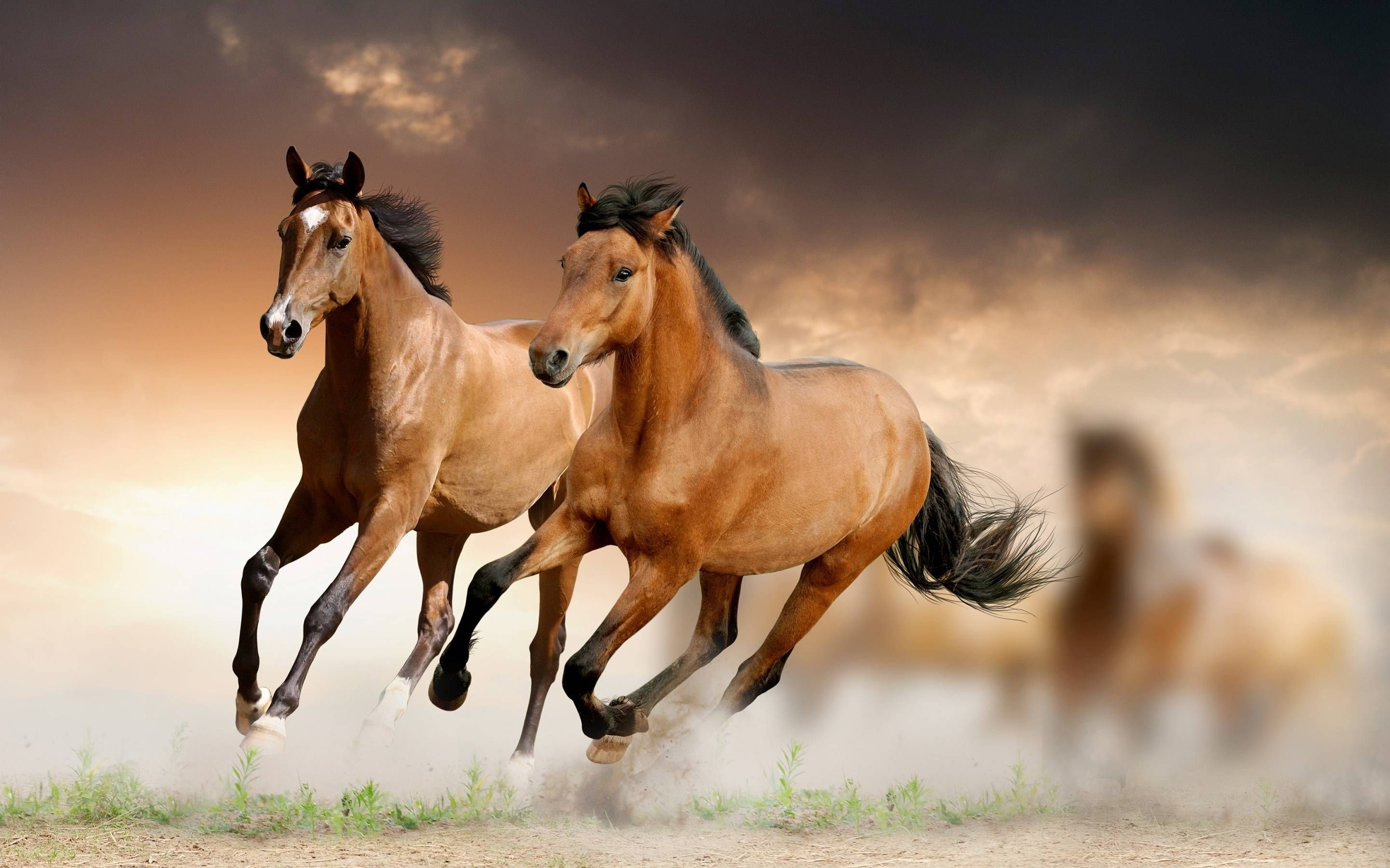 Res: 2880x1800, Full HD p Horse Wallpapers HD Desktop Backgrounds x