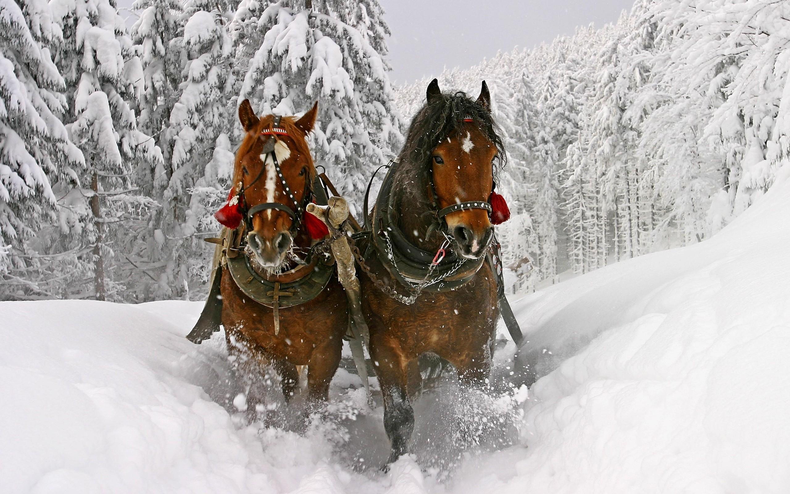 Res: 2560x1600, Snow Dashing Horses Wallpaper