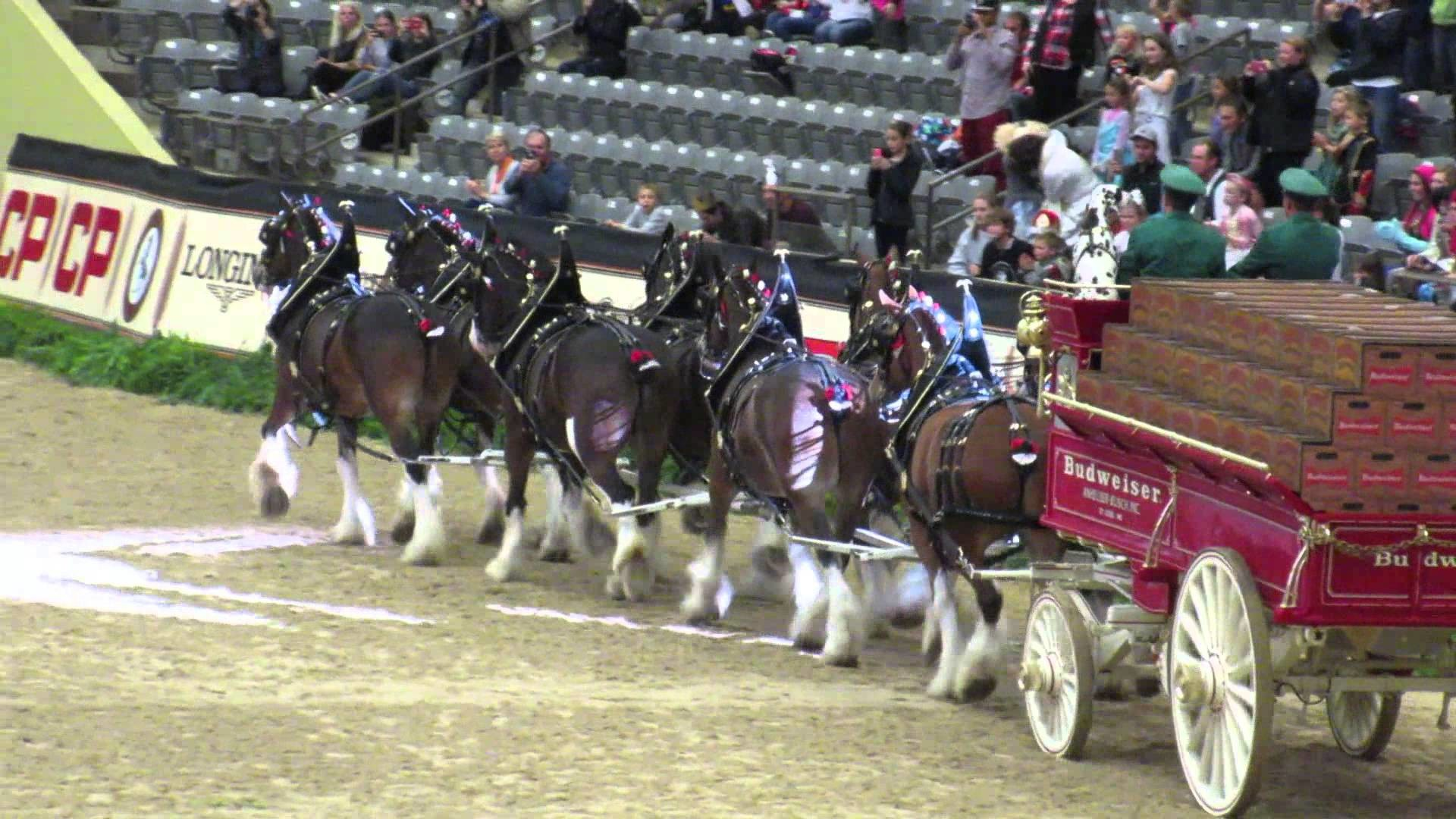 Res: 1920x1080, Budweiser Clydesdale at the CP National Horse Show