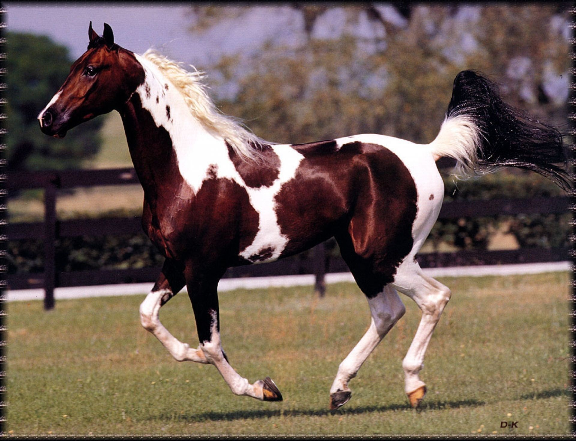 Clydesdale Horses Wallpapers Hd Wallpaper Collections