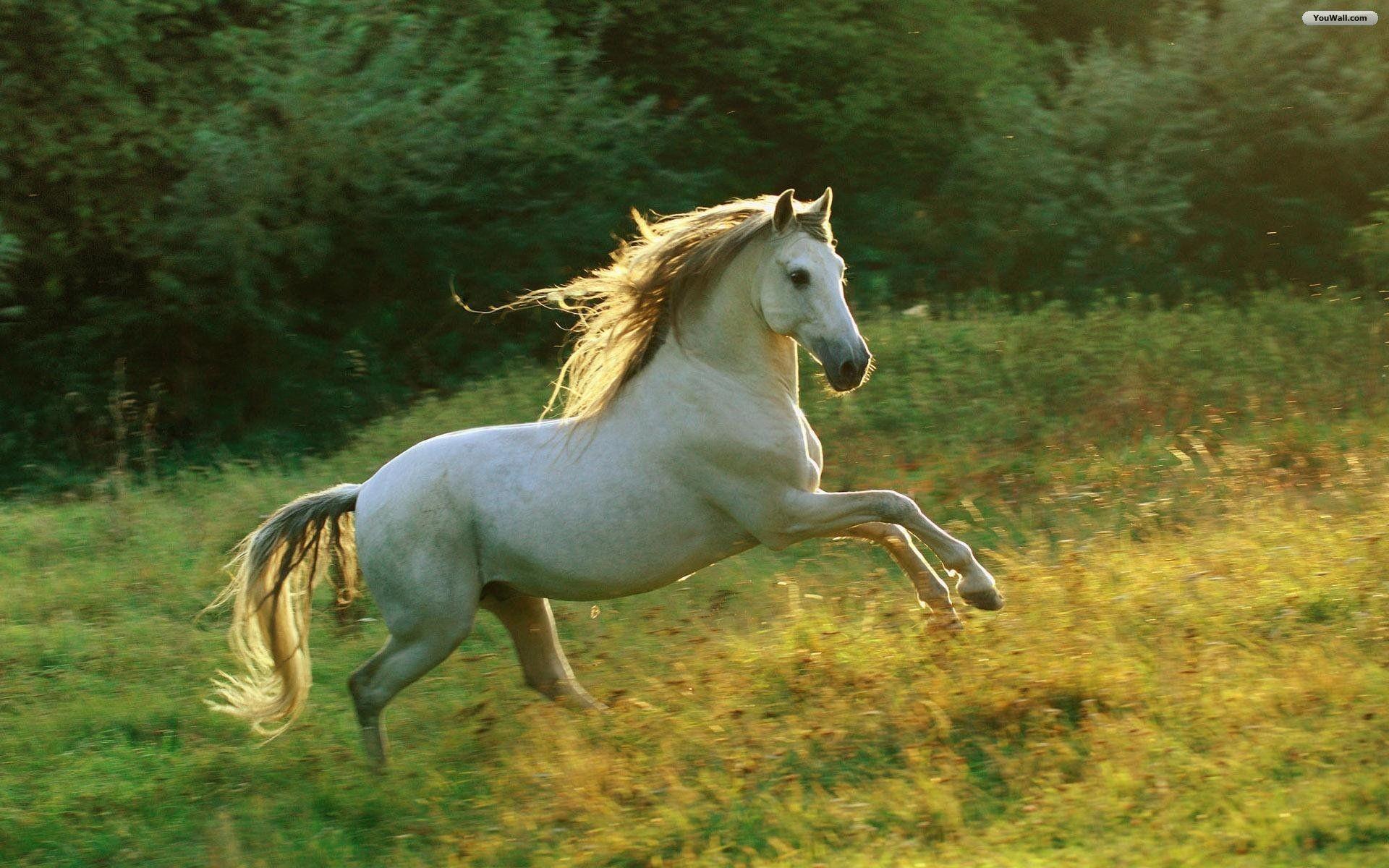 Res: 1920x1200, horse wallpaper hd 1920×1080 Horse Wallpaper Hd (48 Wallpapers) | Adorable  Wallpapers