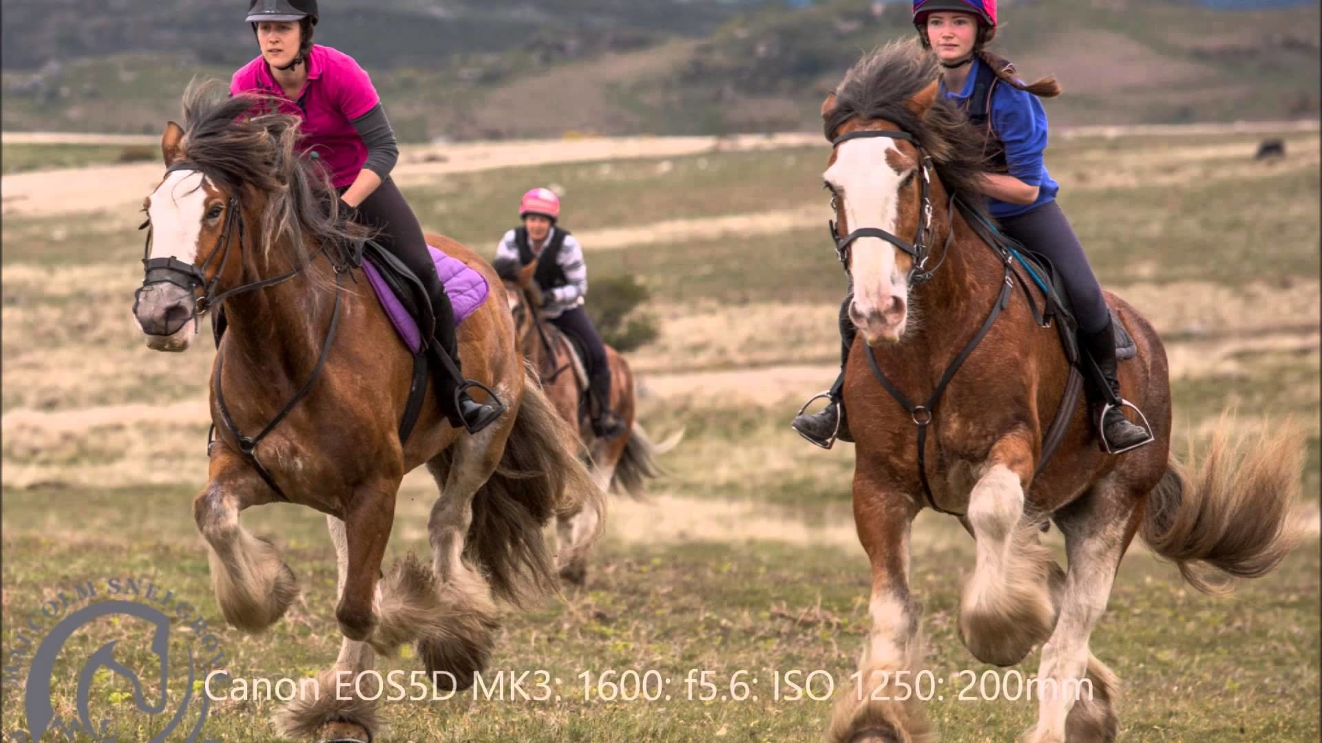 Res: 1920x1080, Photographing Clydesdale Horses on Dartmoor