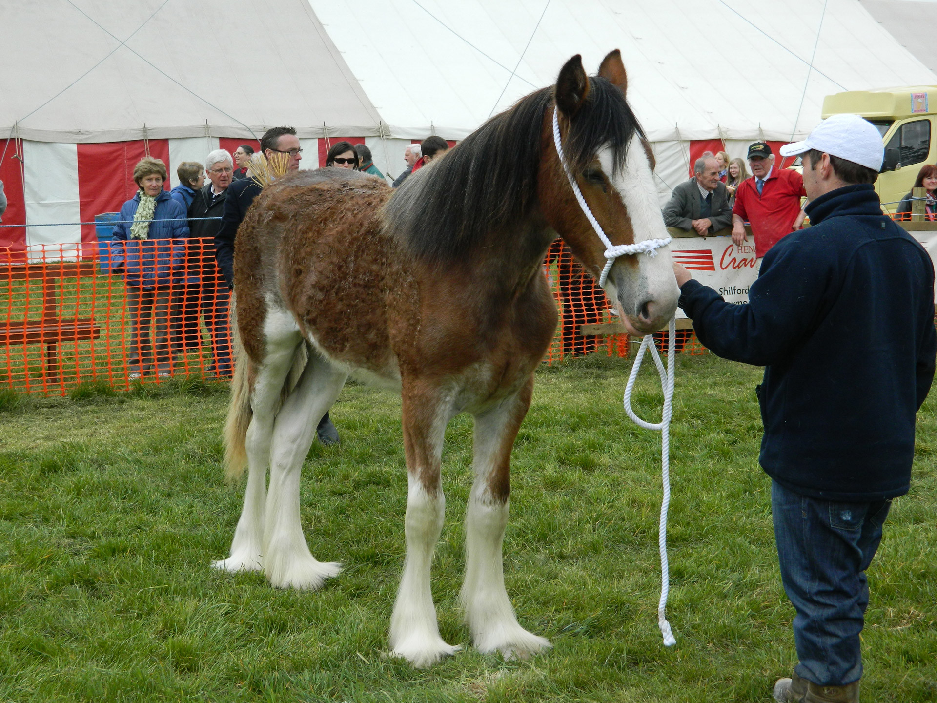 Res: 1920x1440, Clydesdale Horse