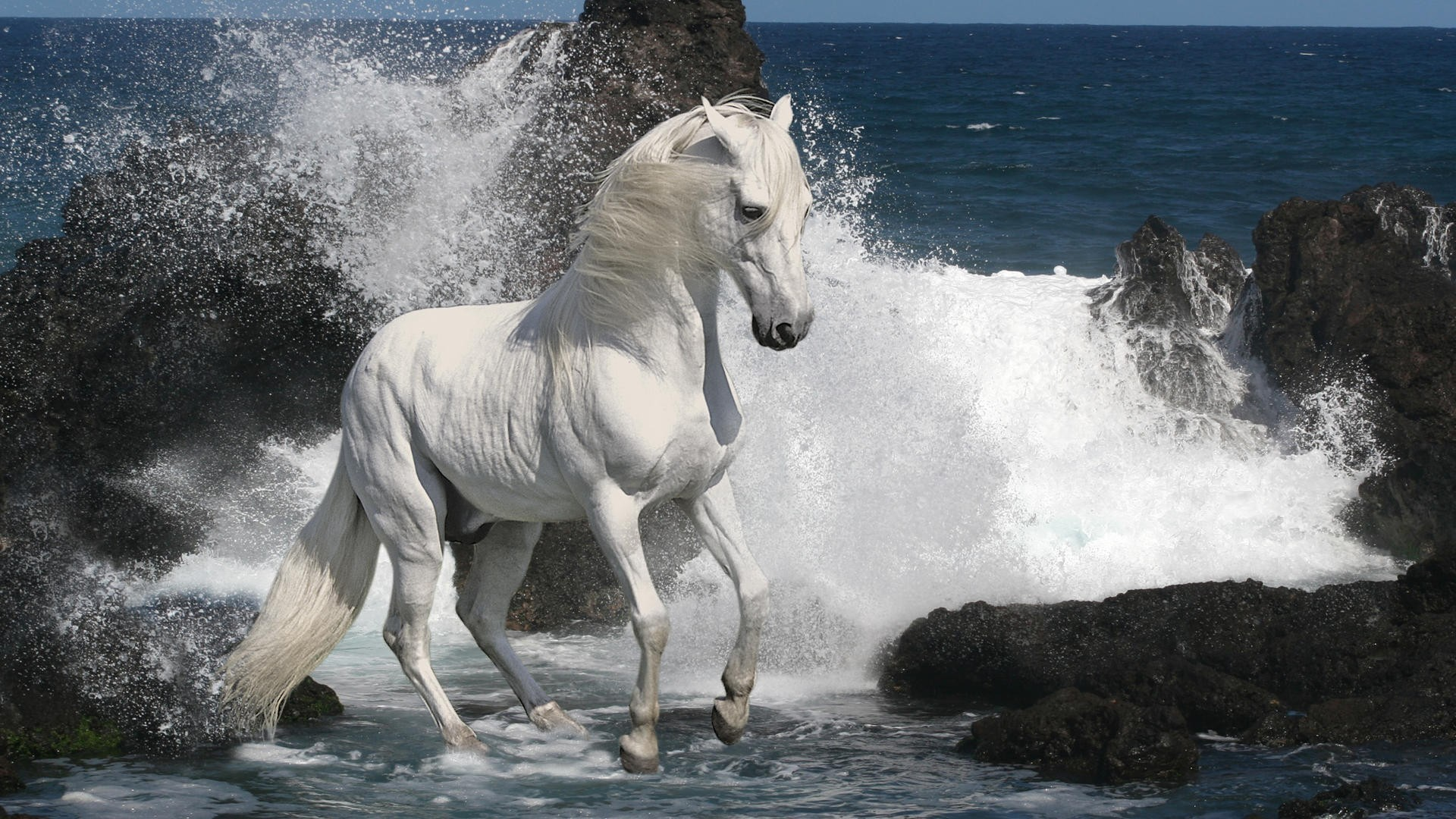 Res: 1920x1080, Southern animals horses sea wallpaper