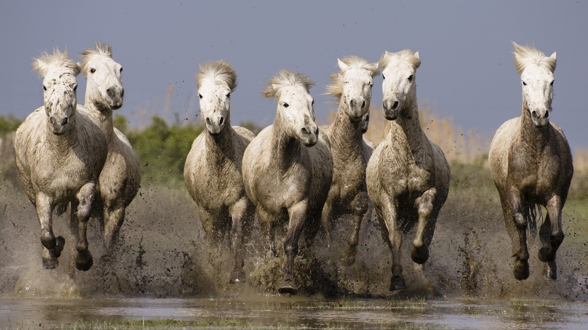 Res: 1920x1080, animals France horses Southern wallpaper