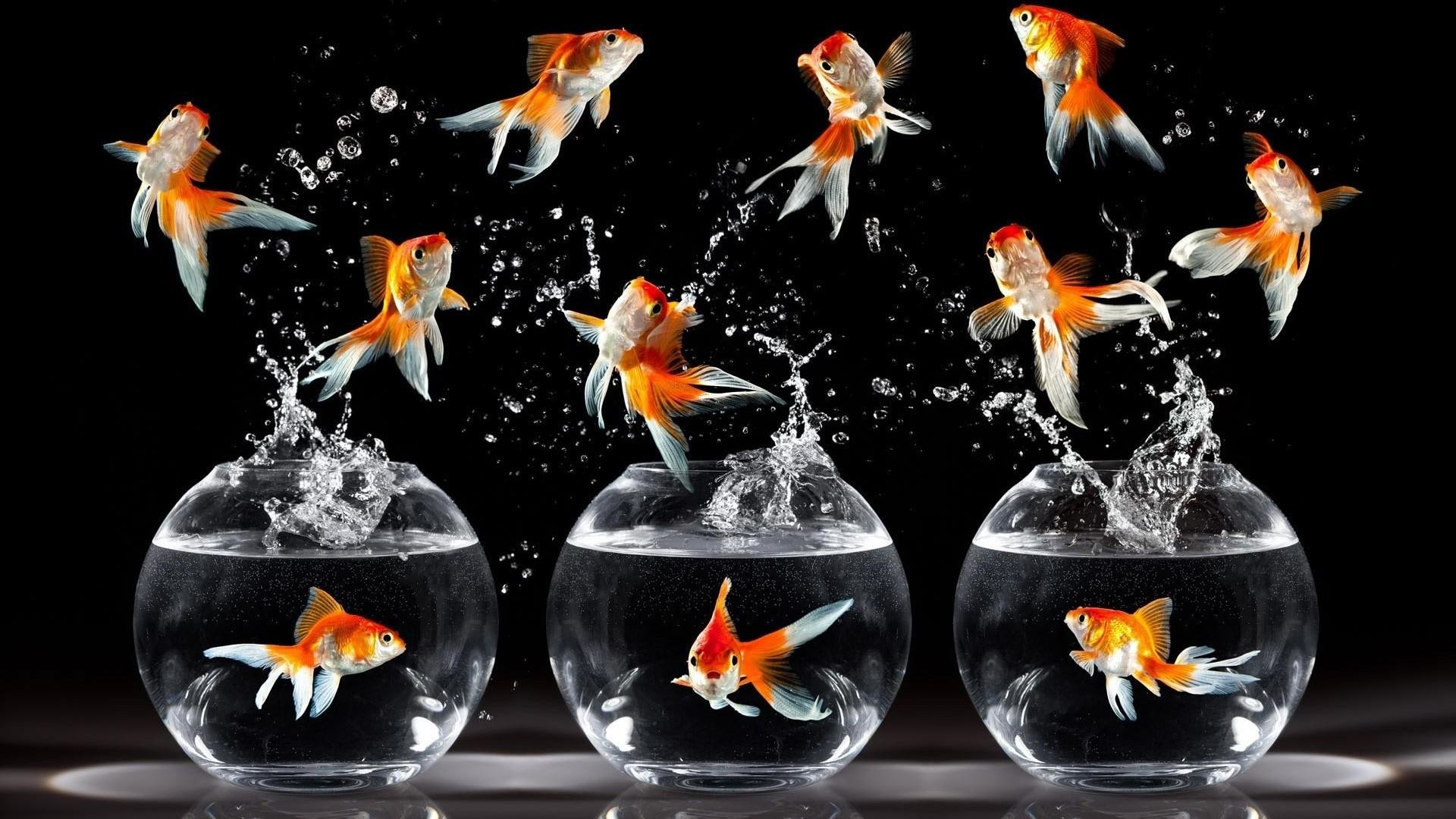 Res: 1920x1080, Goldfish In The Aquarium Wallpaper | Wallpaper Studio 10 | Tens of  thousands HD and UltraHD wallpapers for Android, Windows and Xbox