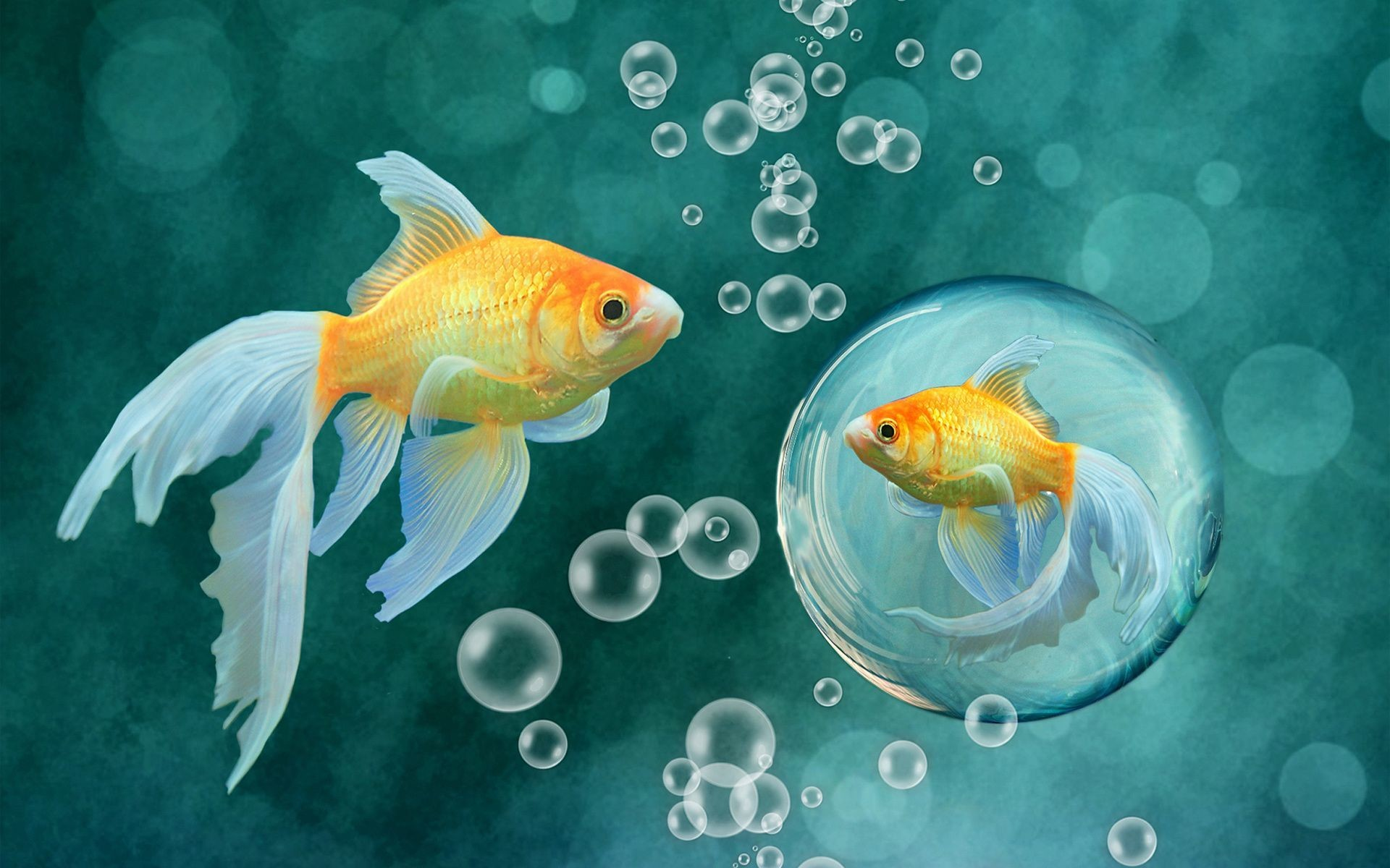 Res: 1920x1200, Goldfish HD Wallpaper 1920x1080 Goldfish HD Wallpaper