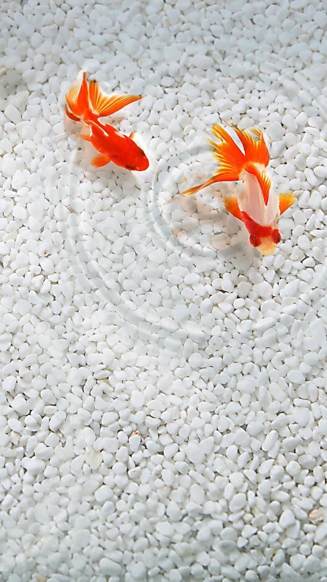 Res: 1080x1920, Discover ideas about Fish Wallpaper Iphone