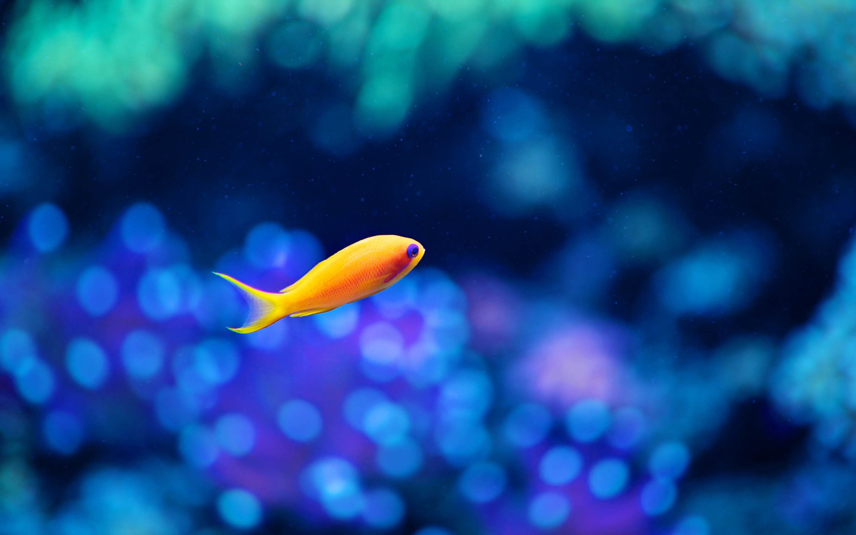 Res: 2880x1800, Little Fancy Fish