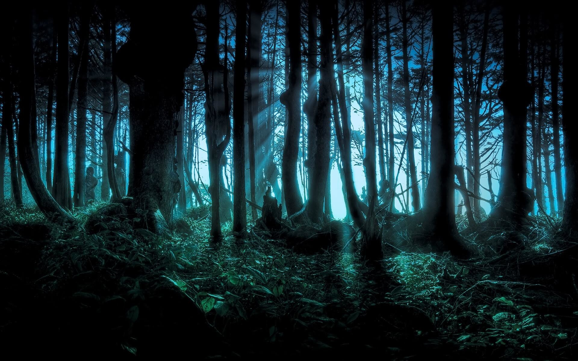 Res: 1920x1200, happy halloween wallpaper scary forest trees