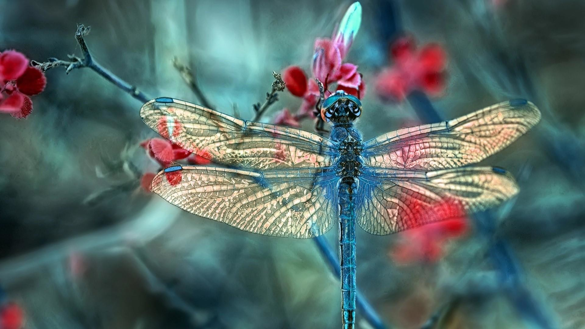 Res: 1920x1080, Dragonfly - Macro Photography Wallpaper | Wallpaper Studio 10 | Tens of  thousands HD and UltraHD wallpapers for Android, Windows and Xbox