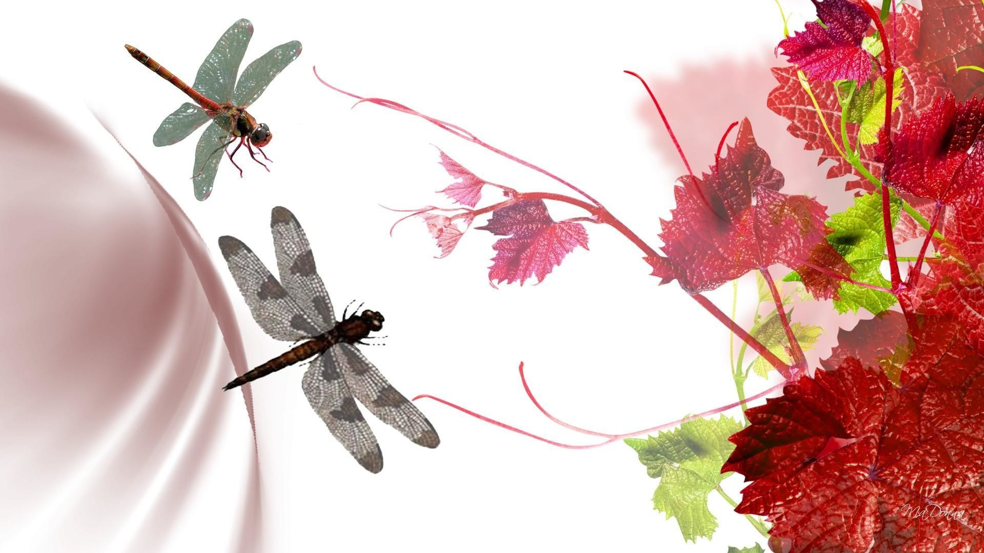 Res: 1920x1080, Grape Leaves Dragonflies