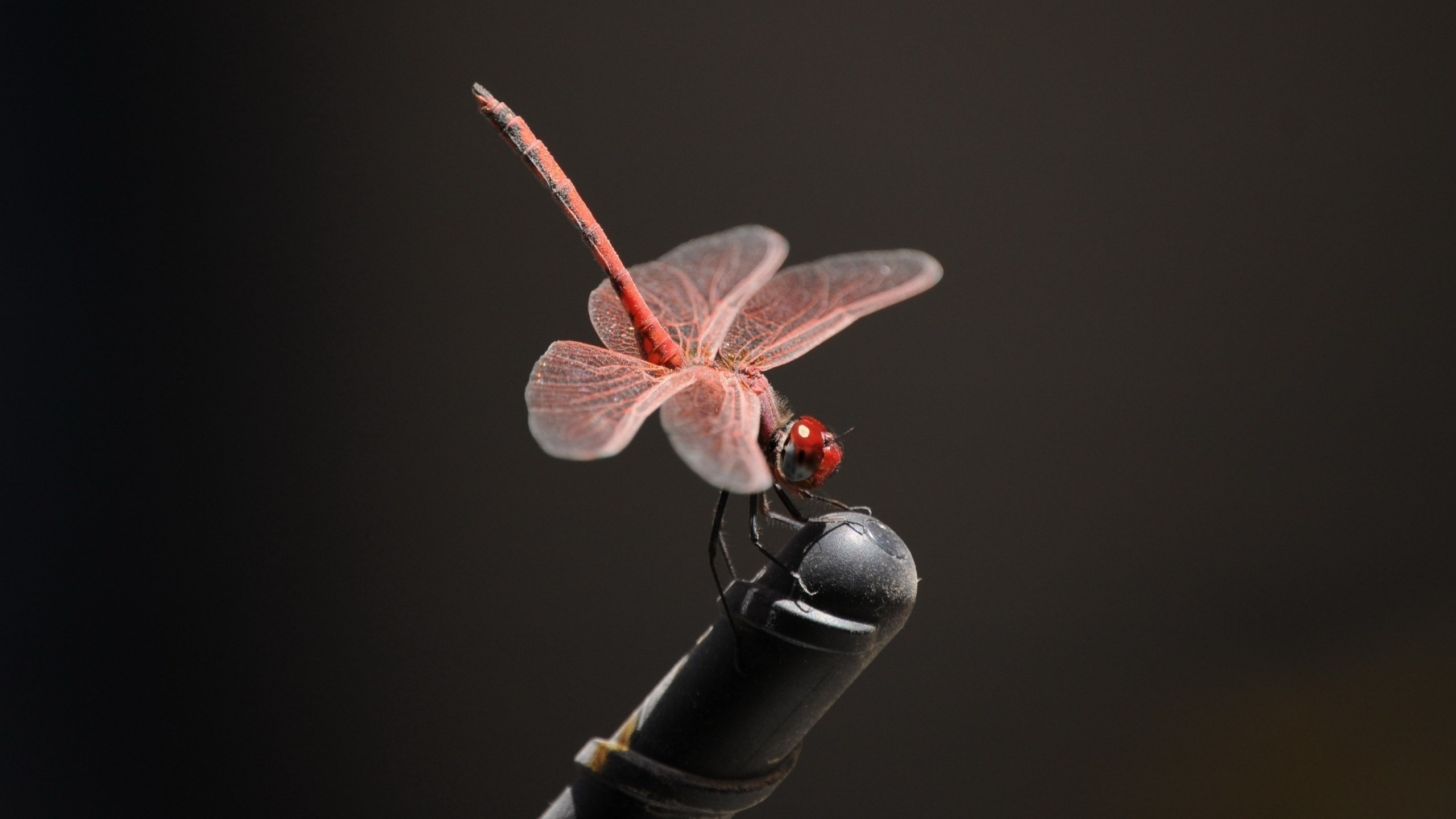 Res: 2560x1440, ... dragonflies-wallpapers-stugon (5) ...