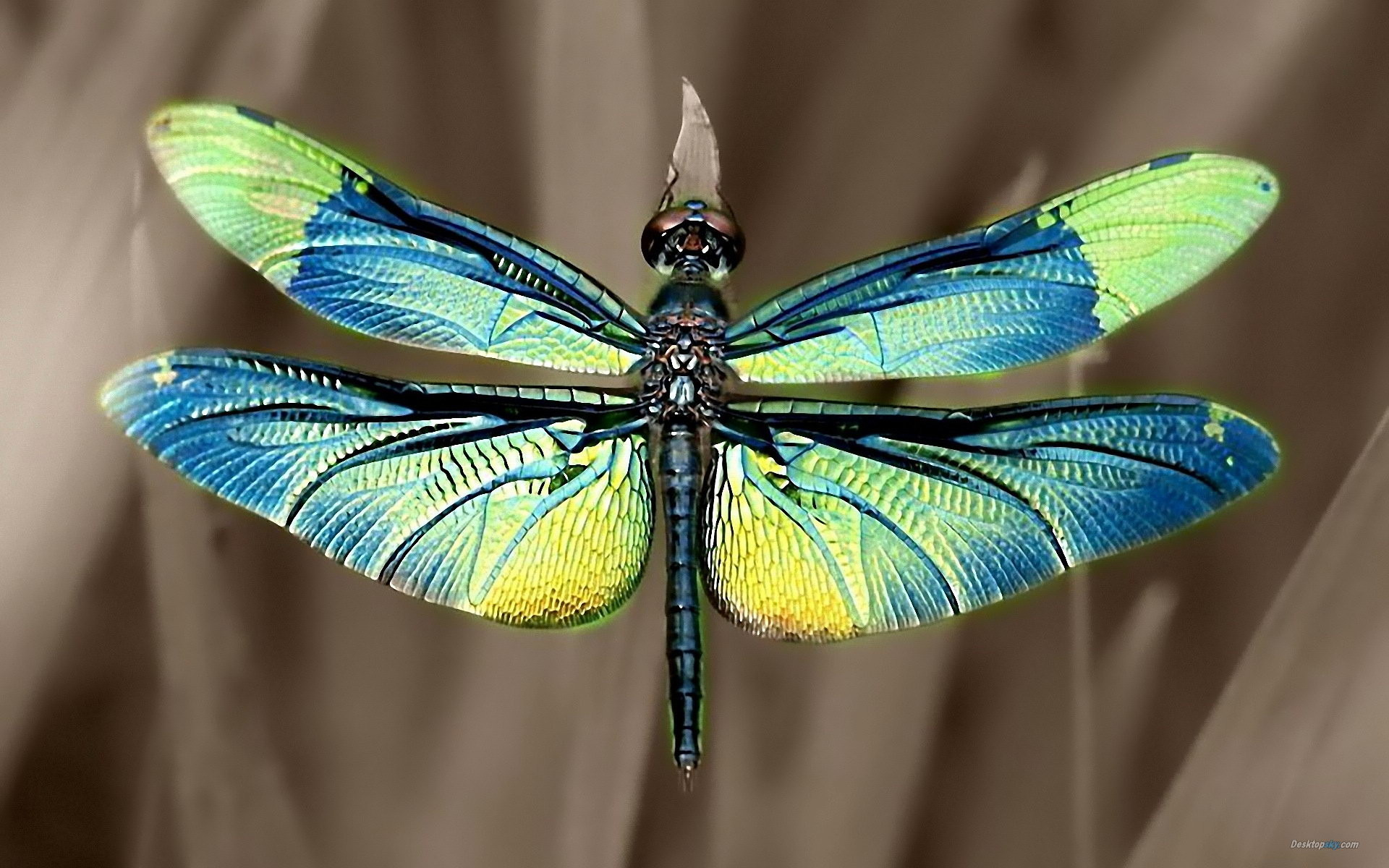 Res: 1920x1200, Dragonfly Wallpapers 23 - 1920 X 1200